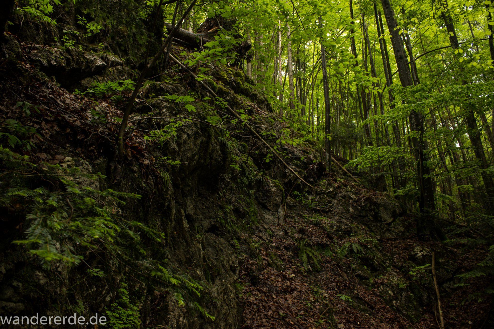Wanderung beim Alpsee bei Hohenschwangau, schöner schmaler Wanderweg durch Laubwald und Nadelwald, Frühling in Bayern, alte Bäume werden liegen gelassen, große Felsen am Wegrand