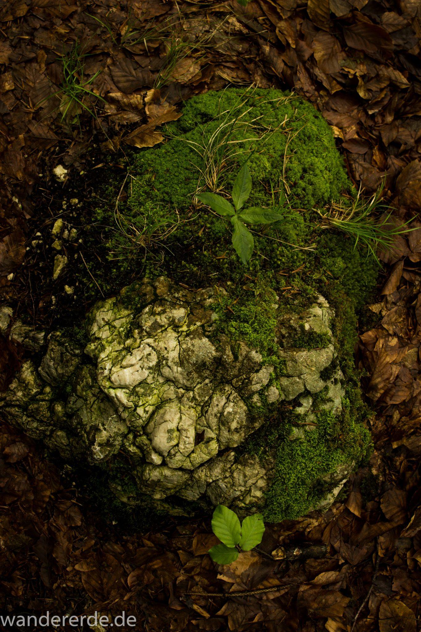 Wanderung beim Alpsee bei Hohenschwangau, mit Moos bewachsener Stein