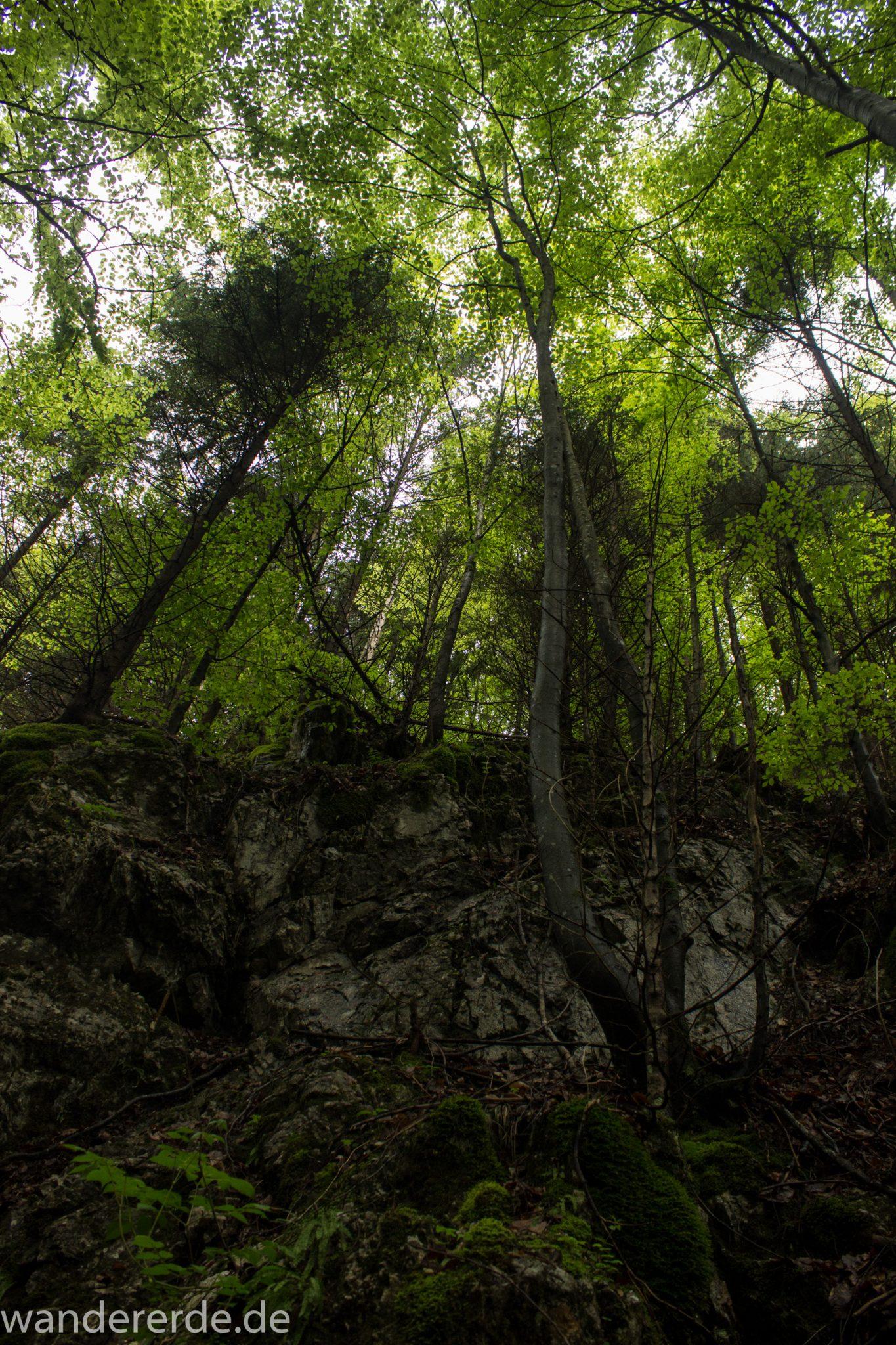 Wanderung beim Alpsee bei Hohenschwangau, schöner schmaler Wanderweg durch Laubwald und Nadelwald, Frühling in Bayern, alte Bäume werden liegen gelassen, große Felsen