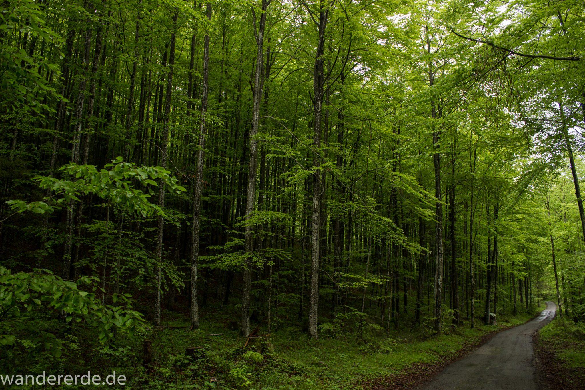Wanderung beim Alpsee bei Hohenschwangau, Rundwanderweg durch Laubwald und Nadelwald, Frühling in Bayern