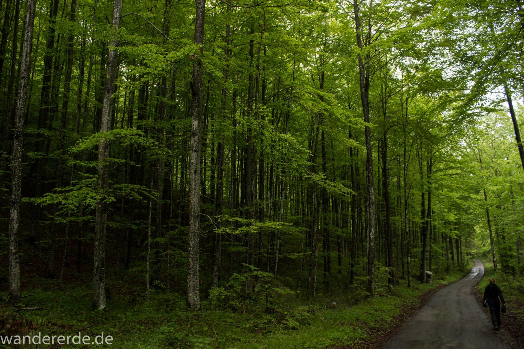 Wanderung beim Alpsee bei Hohenschwangau, Rundwanderweg führt entlang der Fürstenstraße, durch Laubwald und Nadelwald, Frühling in Bayern
