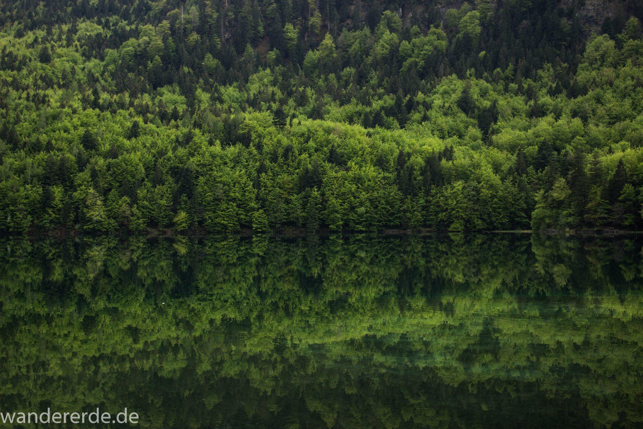 Alpsee bei Hohenschwangau, in der Nähe von Schloss Neuschwanstein, Aussicht auf Alpsee mit grünem Wald ringsrum, Laubbaum, Nadelbaum, Umgebung spiegelt sich im See, Rundwanderweg um den Alpsee