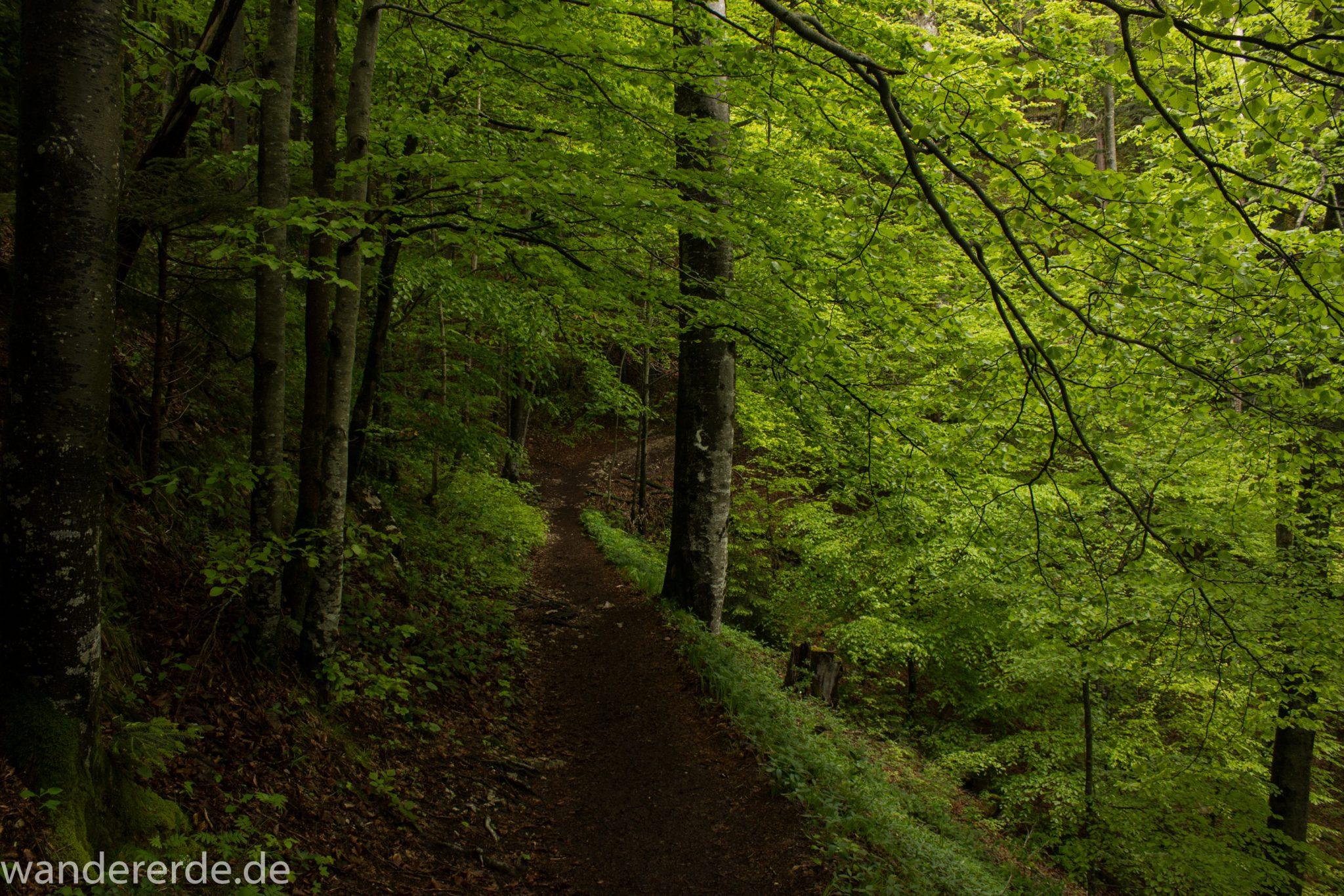 Wanderung beim Alpsee bei Hohenschwangau, schöner schmaler Wanderweg durch Laubwald und Nadelwald, Frühling in Bayern, Moos am Baum