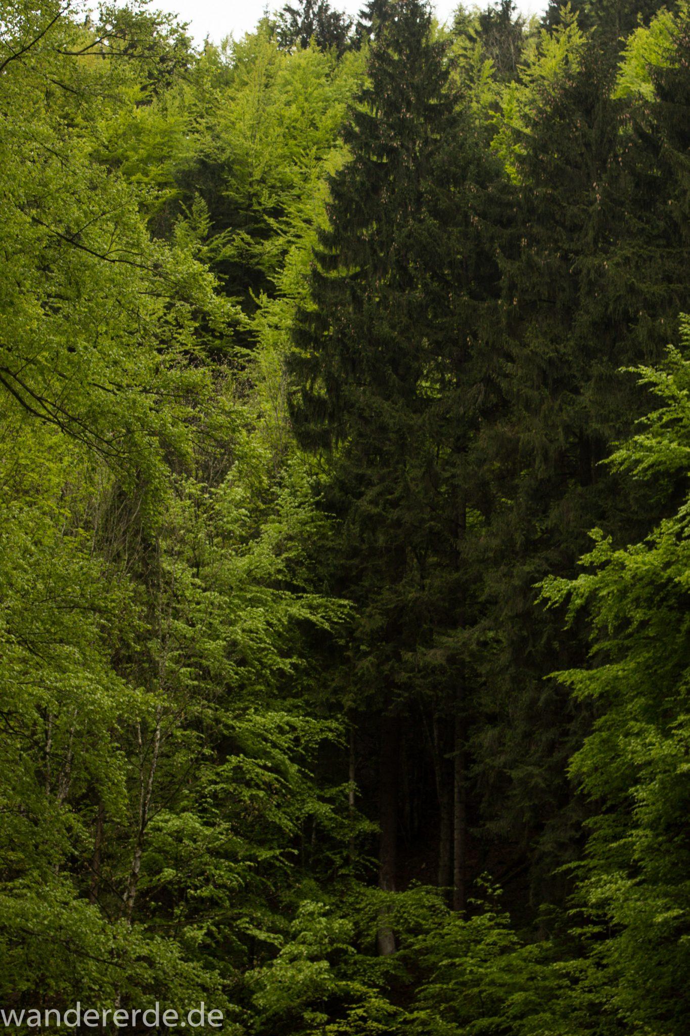 Wanderung beim Alpsee bei Hohenschwangau, schöner schmaler Wanderweg durch Laubwald und Nadelwald, Frühling in Bayern