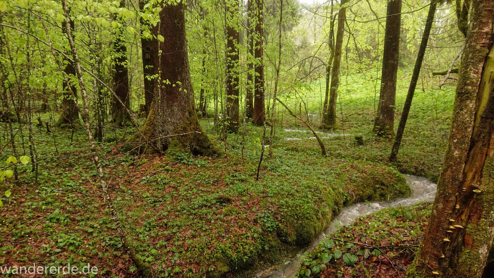 Wanderung Tobelweg ab Gunzesried im Allgäu, Ostertal Tobelweg ab Wanderparkplatz Gunzesrieder Säge wandern, abwechslungsreicher schmaler Pfad zum Ostertal, umgeben von Felsen und schönem, dichtem Mischwald, kleiner Gebirgsbach
