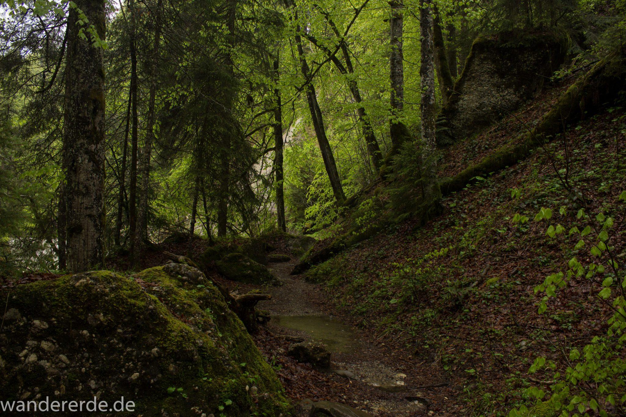 Wanderung Tobelweg ab Gunzesried im Allgäu, Ostertal Tobelweg ab Wanderparkplatz Gunzesrieder Säge wandern, abwechslungsreicher schmaler Pfad zum Ostertal, umgeben von Felsen und schönem, dichtem Mischwald