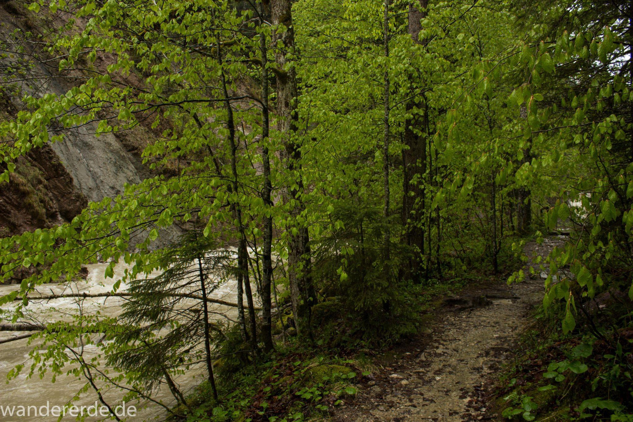 Wanderung Tobelweg ab Gunzesried im Allgäu, Ostertal Tobelweg ab Wanderparkplatz Gunzesrieder Säge wandern, abwechslungsreicher schmaler Pfad zum Ostertal, reißender Fluss nach starken Regenfällen, Fluss tritt beinahe über das Ufer, umgeben von Felsen und schönem, dichtem Mischwald