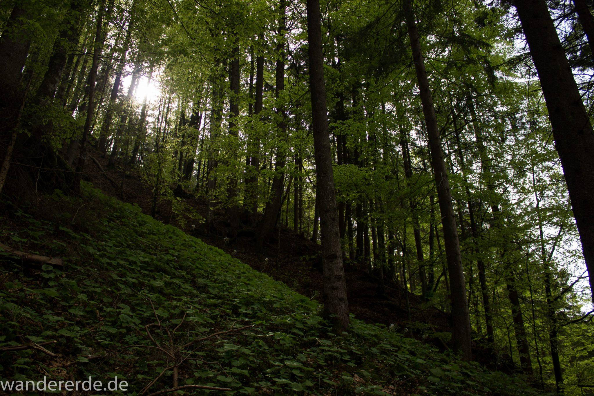Wanderung Unterer Gaisalpsee, über Tobelweg zurück nach Oberstdorf, umgeben von schönem dichtem Mischwald, abwechselungsreicher sehr toller Wanderweg, Sonne zaubert schöne Lichtmomente
