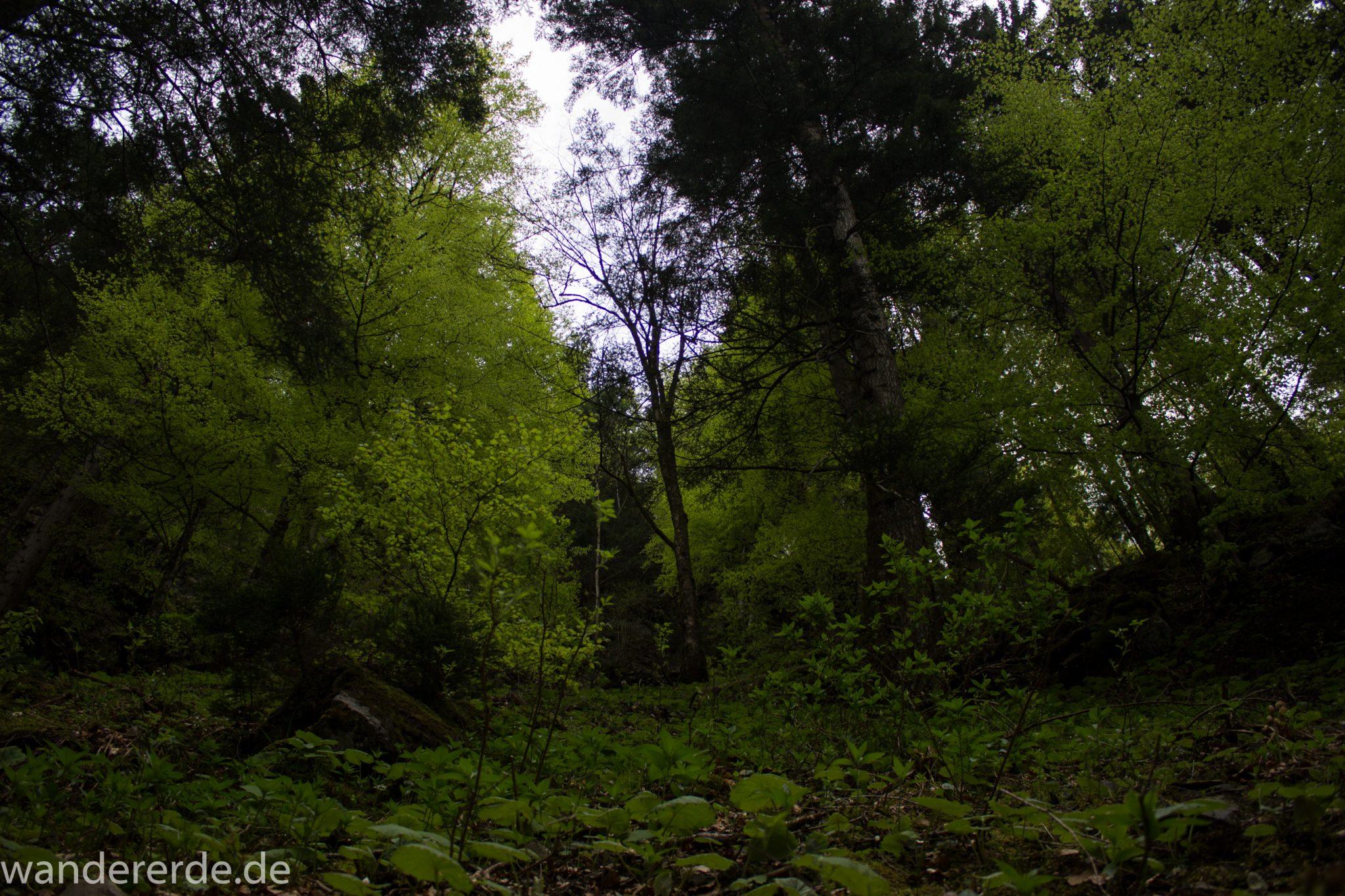 Wanderung Unterer Gaisalpsee, über Tobelweg zurück nach Oberstdorf, umgeben von schönem dichtem Mischwald, abwechselungsreicher sehr toller Wanderweg