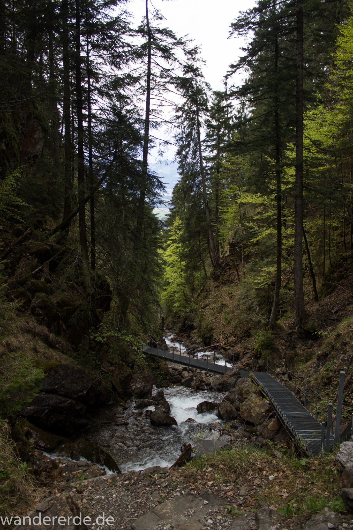 Wanderung Unterer Gaisalpsee, über Tobelweg zurück nach Oberstdorf, schmaler Kiespfad beim Tobelweg, über Brücken und Treppen, teils steil und felsig abwärts, umgeben von schönem dichtem Mischwald, abwechselungsreicher sehr toller Wanderweg