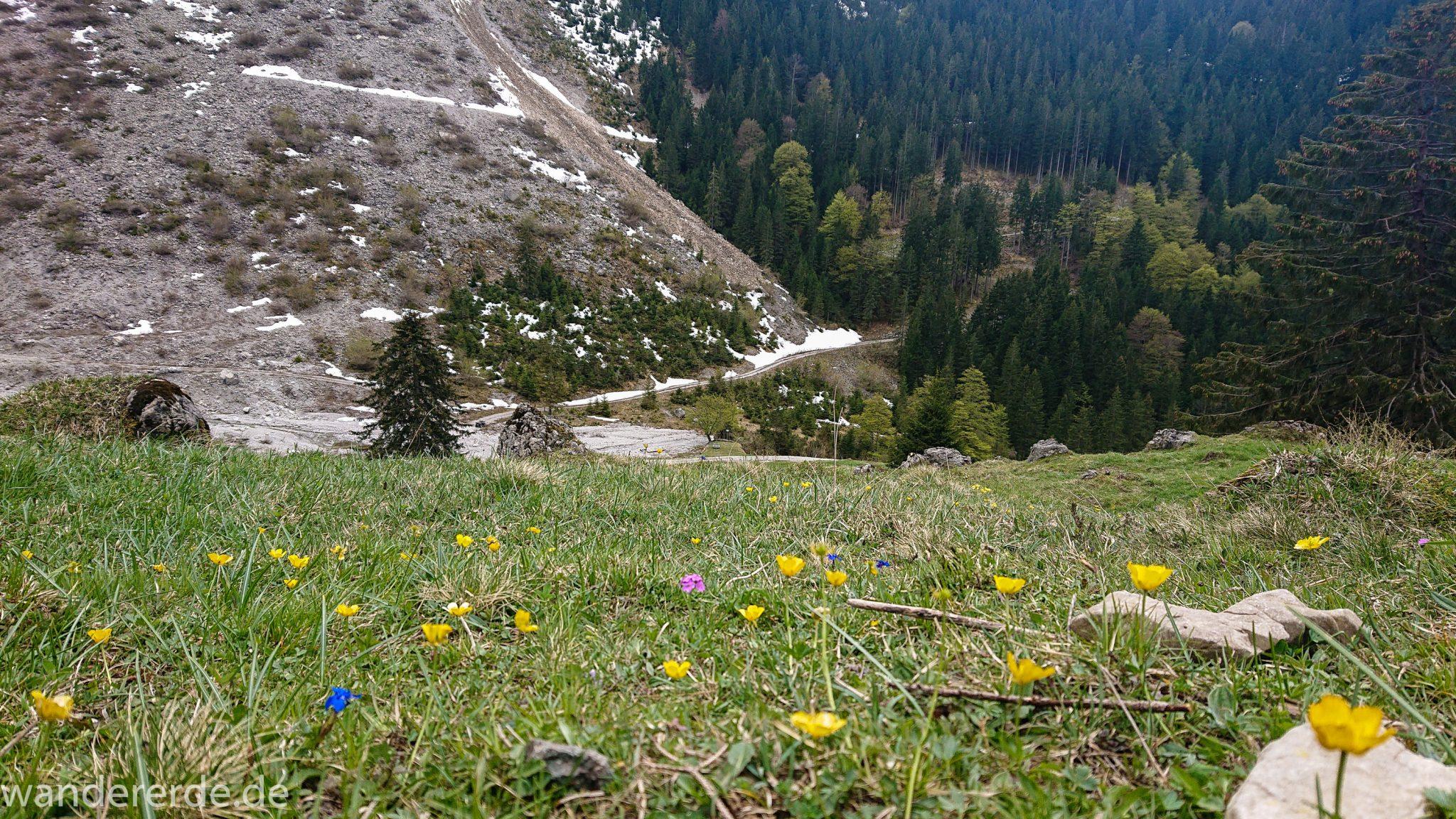 Wanderung Unterer Gaisalpsee, Wanderweg von Oberstdorf im Allgäu, Blumen blühen am Wegesrand in schönen Farben, Frühling im Allgäu, umgeben von schönem dichtem Mischwald und Blick auf Berge im Allgäu, abwechselungsreicher Wanderweg von Oberstdorf zum Unteren Gaisalpsee
