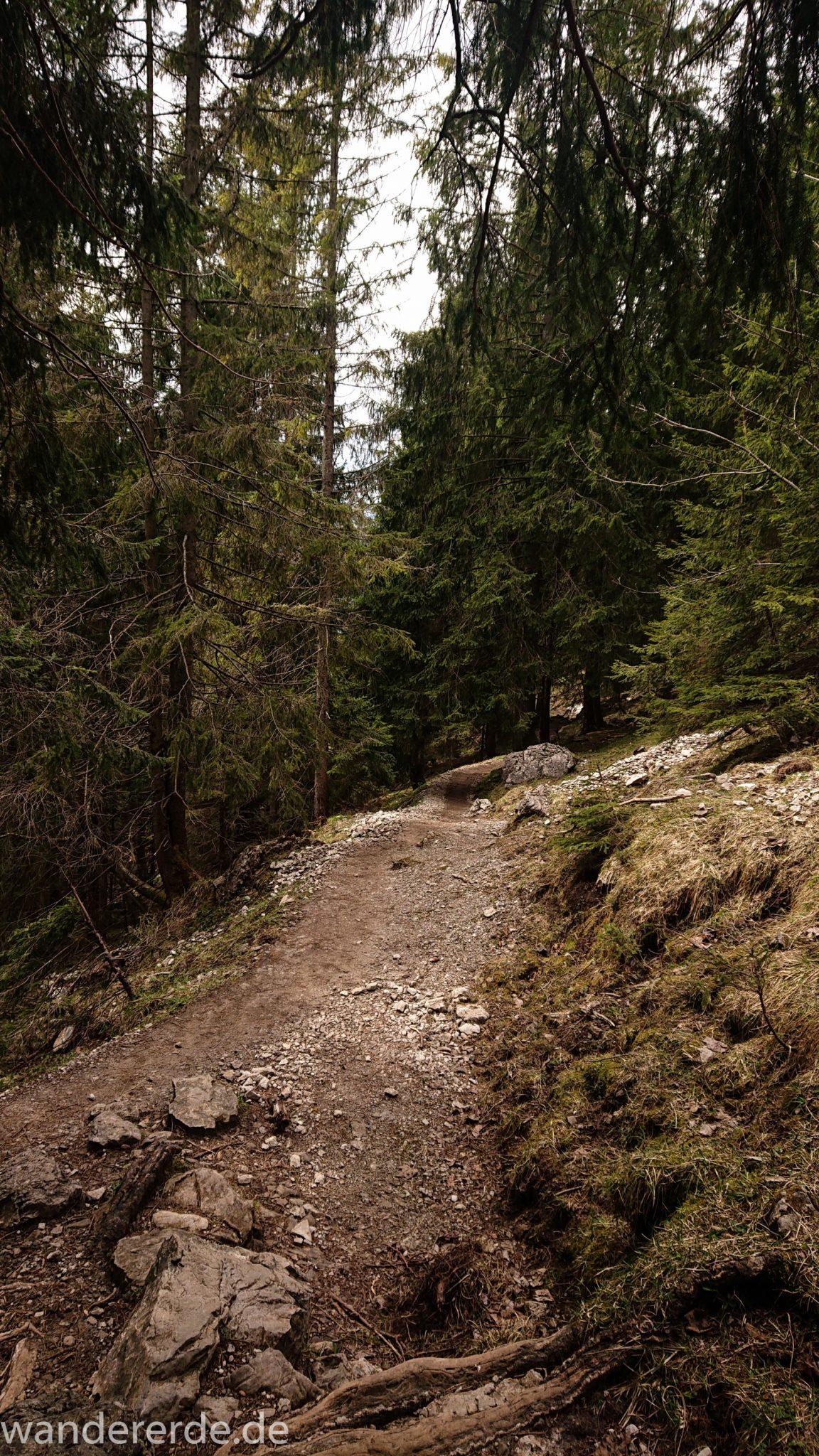 Wanderung Unterer Gaisalpsee, Wanderweg von Oberstdorf im Allgäu, schmalerer Kiespfad wird zunehmend steil und felsig, umgeben von schönem dichtem Mischwald