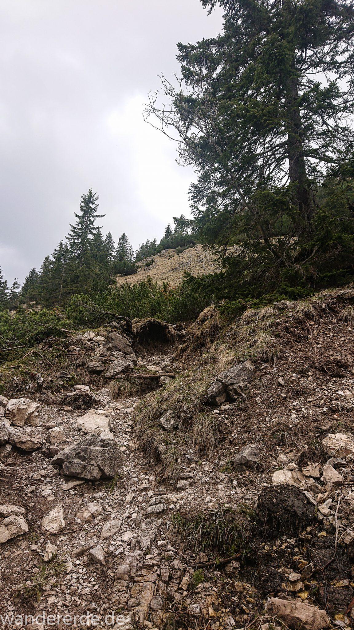 Wanderung Unterer Gaisalpsee, Wanderweg von Oberstdorf im Allgäu, Wanderpfad wird zunehmend schmaler, steil und felsig, umgeben von schönem dichtem Mischwald