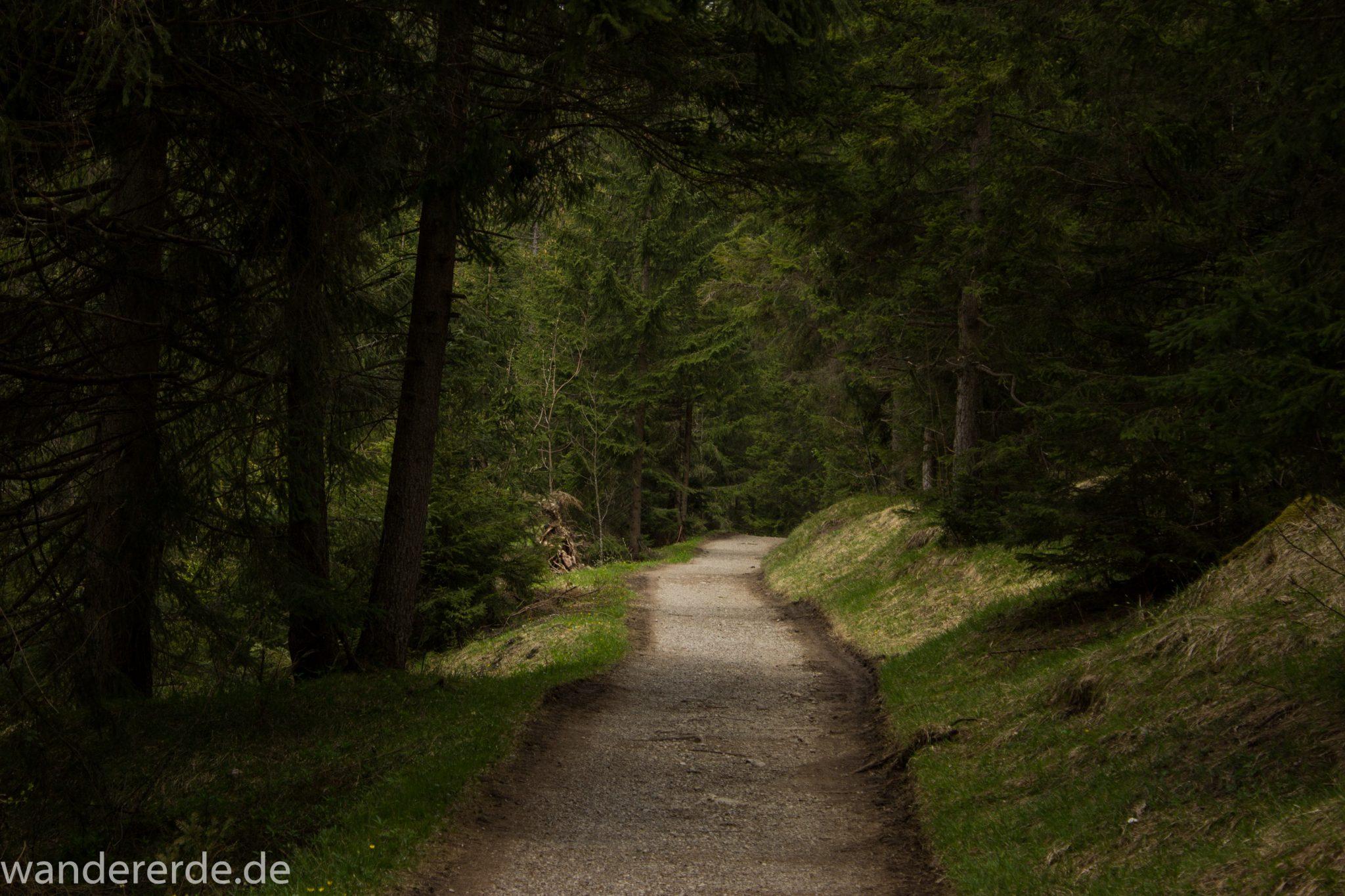 Wanderung Unterer Gaisalpsee, Wanderweg bei Oberstdorf im Allgäu, schmalerer Kiespfad, umgeben von schönem dichtem Mischwald