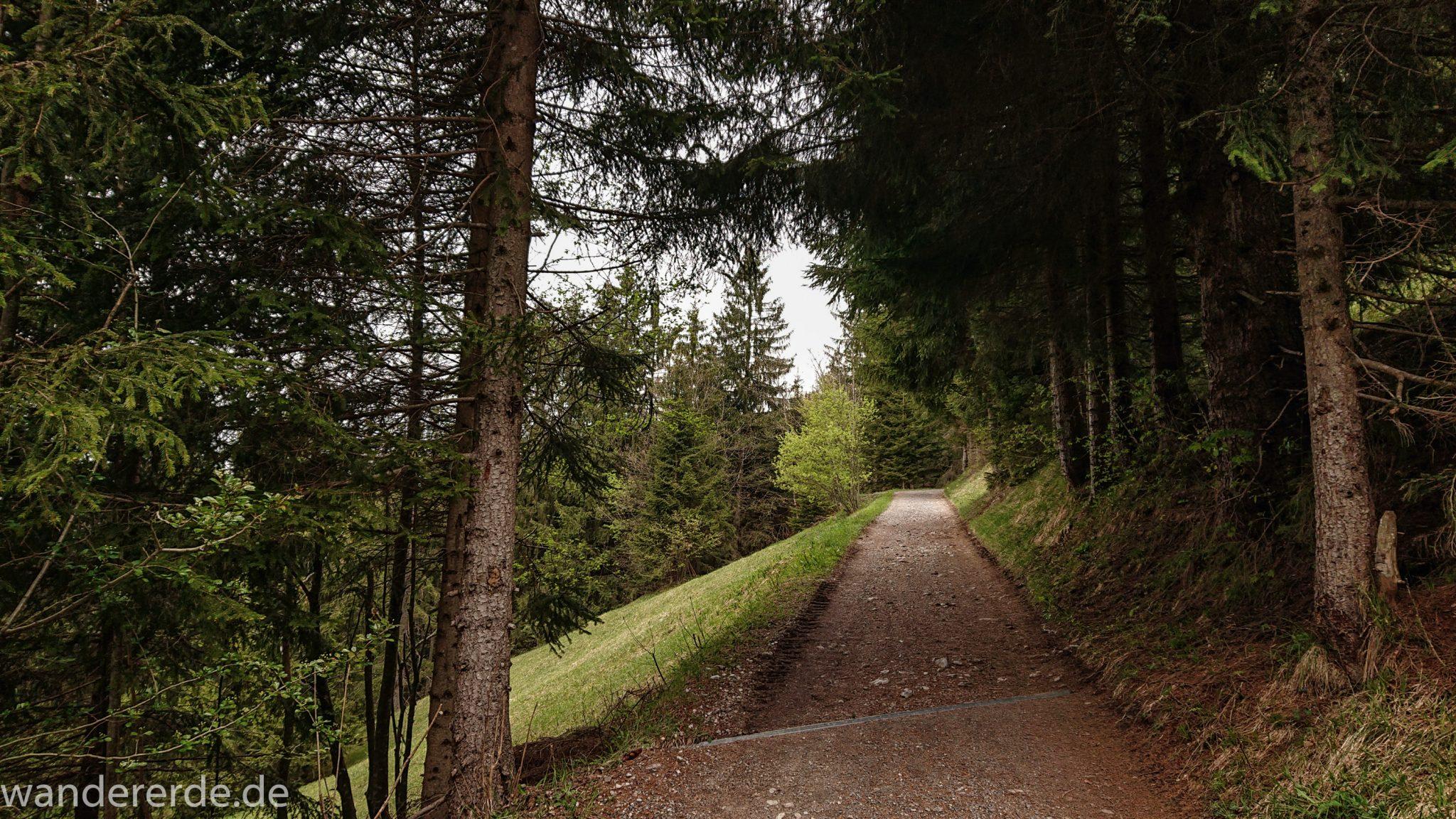 Wanderung Unterer Gaisalpsee, Wanderweg bei Oberstdorf im Allgäu ist zunächst alphaltiert, danach wieder schmalerer Kiespfad, umgeben von schönem dichtem Mischwald