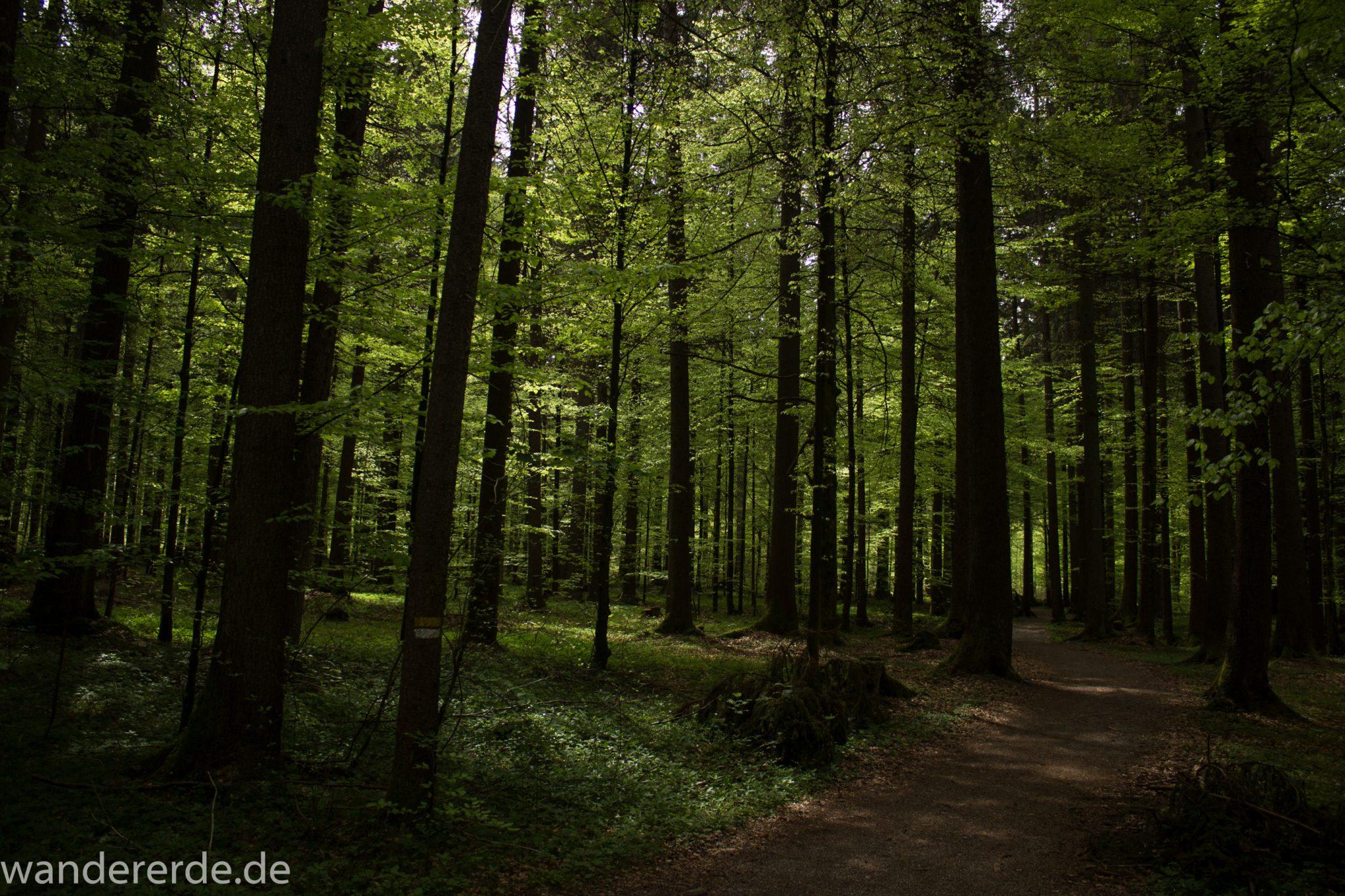 Wanderung Unterer Gaisalpsee, schöner dichter Laubwald beim Ort Fischen im Allgäu, warmer Frühlingstag, Start der Wanderung nach Oberstdorf und zum Unteren Gaisalpsee, schattiger Wanderweg