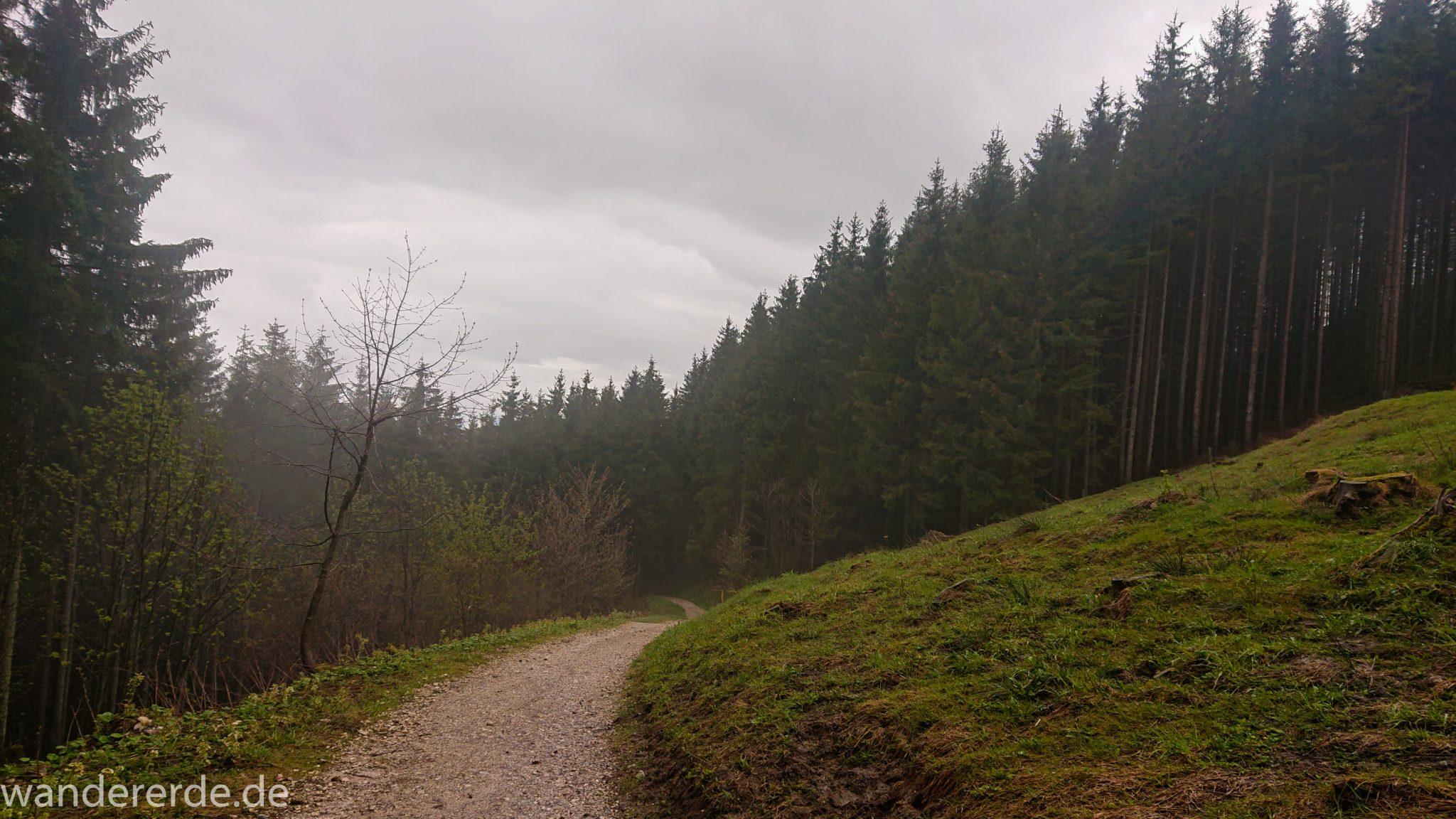 Tegelbergkopf Wanderung bei Stadt Füssen – Parkplatz Drehhütte bis Rohrkopfhütte, Wanderweg durch schönen und dichten Wald, wolkig, tolle Atmosphäre, saftig grüne Wiese