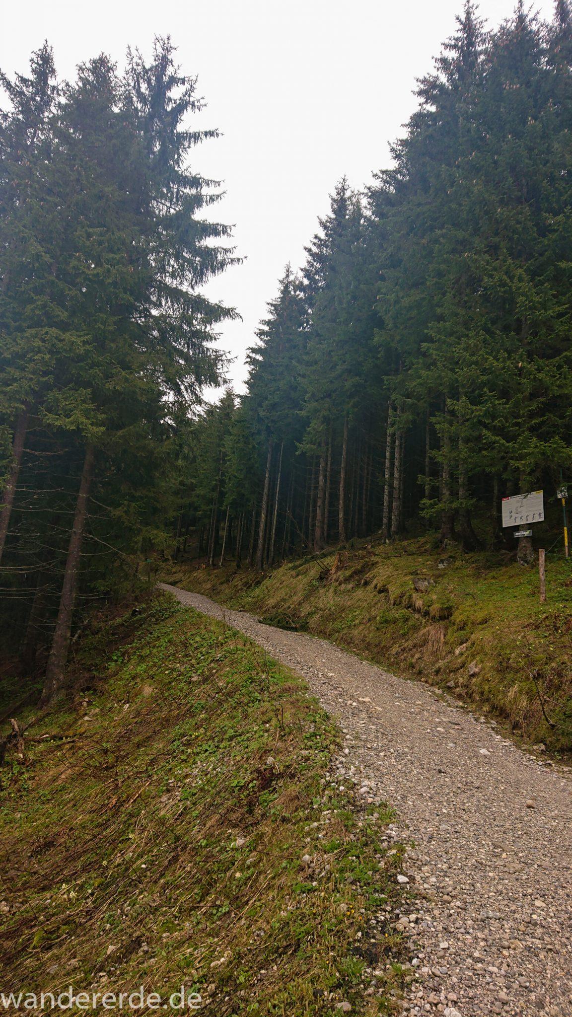Tegelbergkopf Wanderung bei Stadt Füssen – Parkplatz Drehhütte bis Rohrkopfhütte, Wanderweg steil bergauf zum Tegelberg durch schönen und dichten Wald, wolkig, tolle Atmosphäre, saftig grüne Wiese