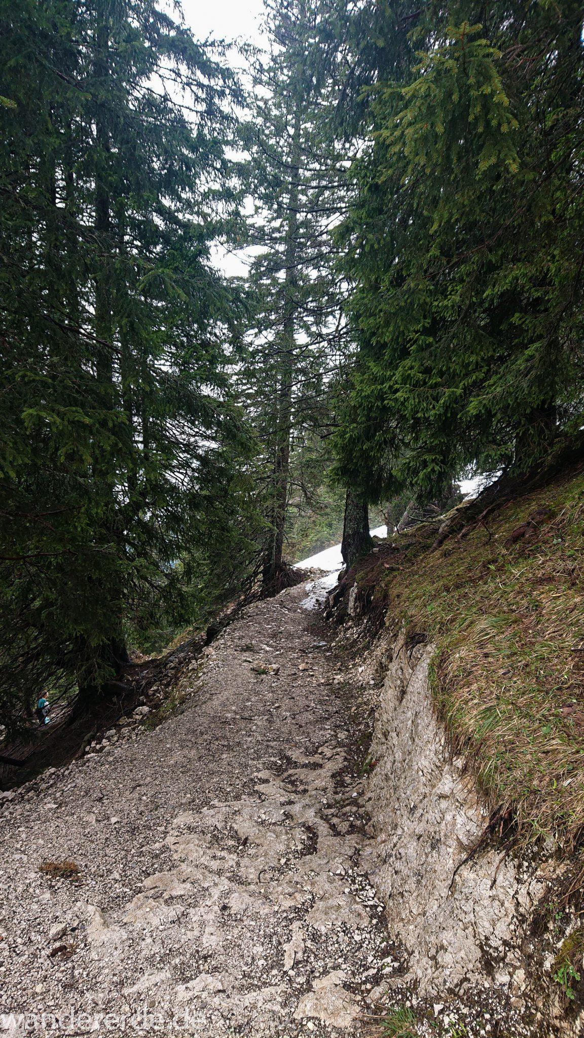 Tegelbergkopf Wanderung bei Stadt Füssen – Parkplatz Drehhütte bis Rohrkopfhütte, Wanderweg steil bergauf zum Tegelberg durch schönen und dichten Wald, wolkig, tolle Atmosphäre, saftig grüne Wiese, Schneefelder