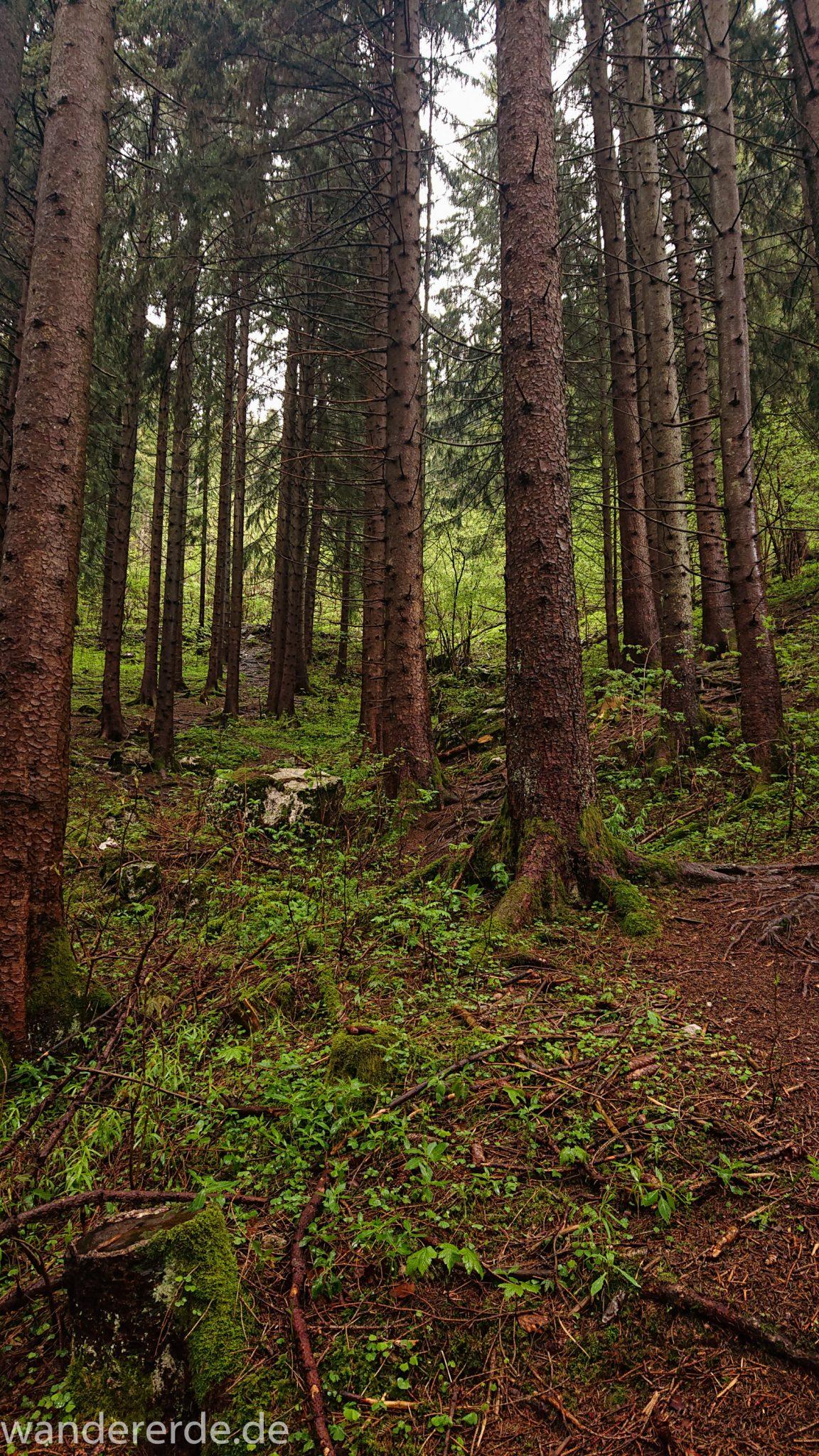 Wandern beim Tegelberg, Stadt Füssen – Parkplatz Drehhütte bis Rohrkopfhütte, schöner Wald, wolkig, tolle Atmosphäre
