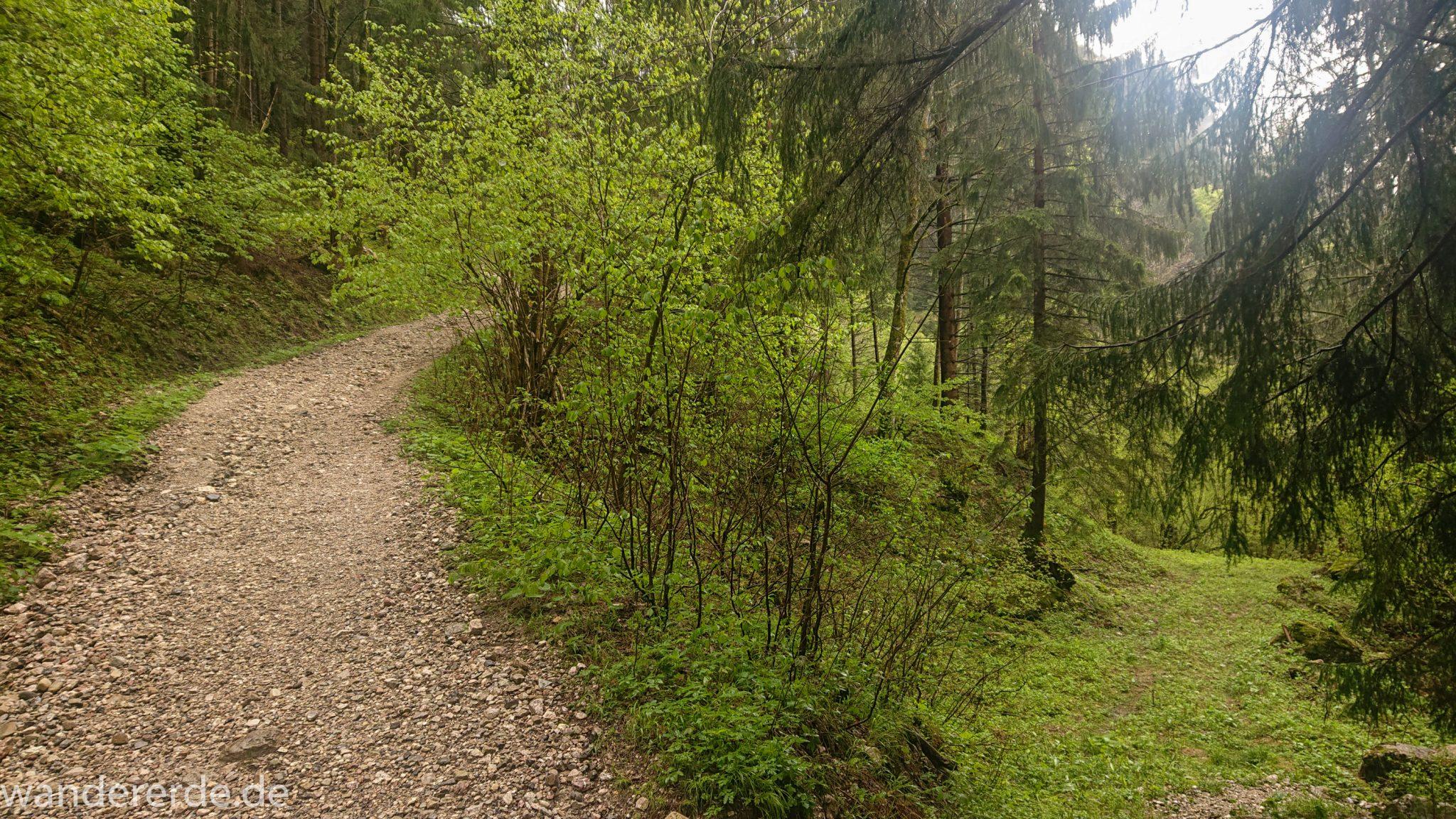 Wandern beim Tegelberg, Tegelbergkopf Wanderung bei Stadt Füssen – Parkplatz Drehhütte bis Rohrkopfhütte, Wanderweg durch schönen Wald, wolkig, tolle Atmosphäre, saftig grüne Wiese