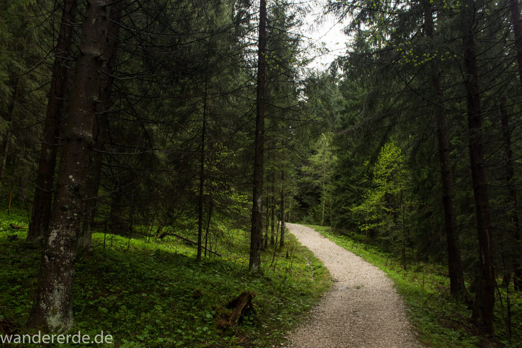 Wandern beim Tegelberg, Tegelbergkopf Wanderung bei Stadt Füssen – Parkplatz Drehhütte bis Rohrkopfhütte, Wanderweg durch schönen und dichten Wald, wolkig, tolle Atmosphäre, saftig grüne Wiese