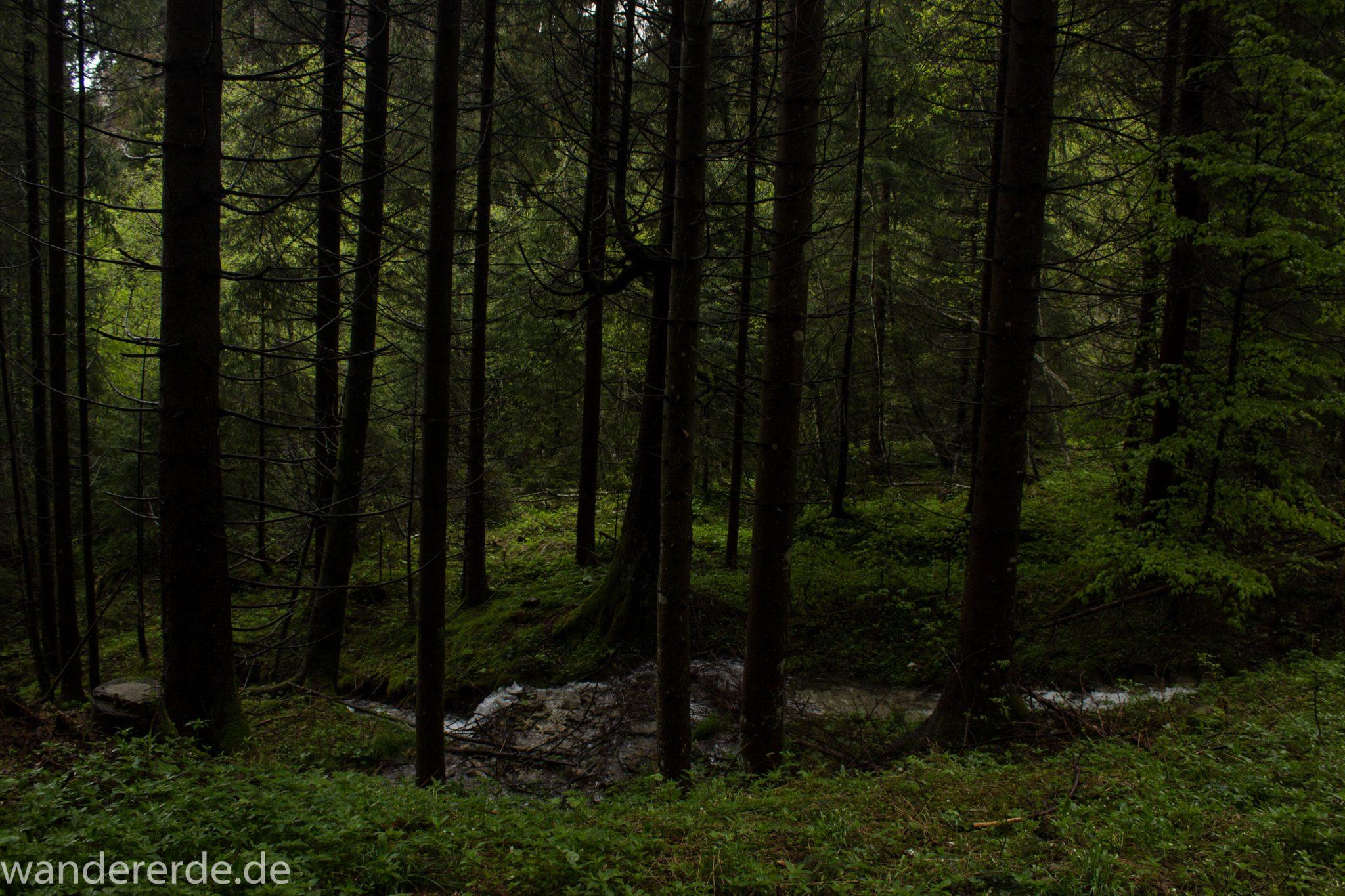 Tegelbergkopf Wanderung bei Stadt Füssen – Parkplatz Drehhütte bis Rohrkopfhütte, Wanderweg durch schönen und dichten Wald, wolkig, tolle Atmosphäre, saftig grüne Wiese, Bach fließt durch Wald