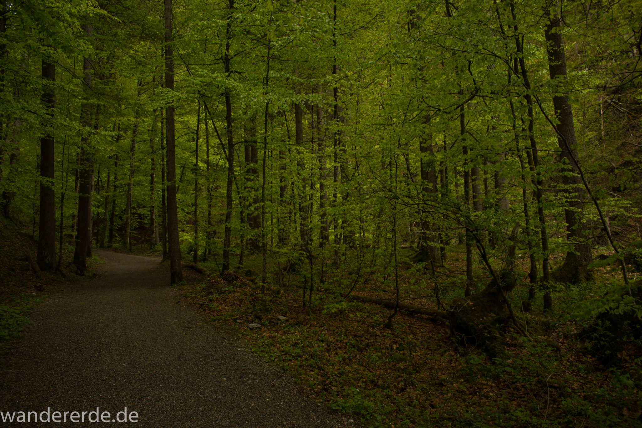 Wanderung im Oytal bei Oberstdorf im Allgäu, Bayern, schöner dichter und grüner Wald führt zum Oytal