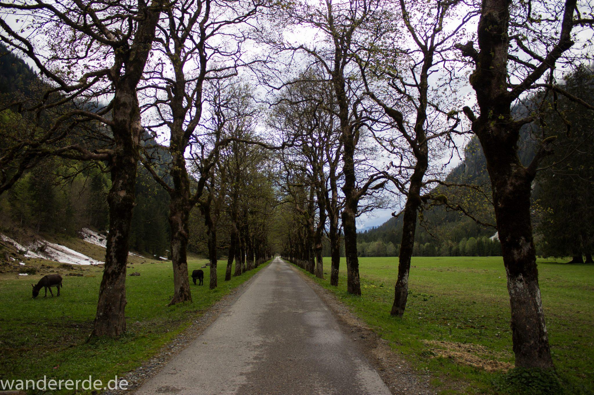 Wanderung im Oytal bei Oberstdorf im Allgäu, Bayern, schöner dichter und grüner Wald  im Oytal, Wanderweg leider Asphalt, aber die Umgebung entschädigt, Allee aus Bäumen, sehr schöne Atmosphäre