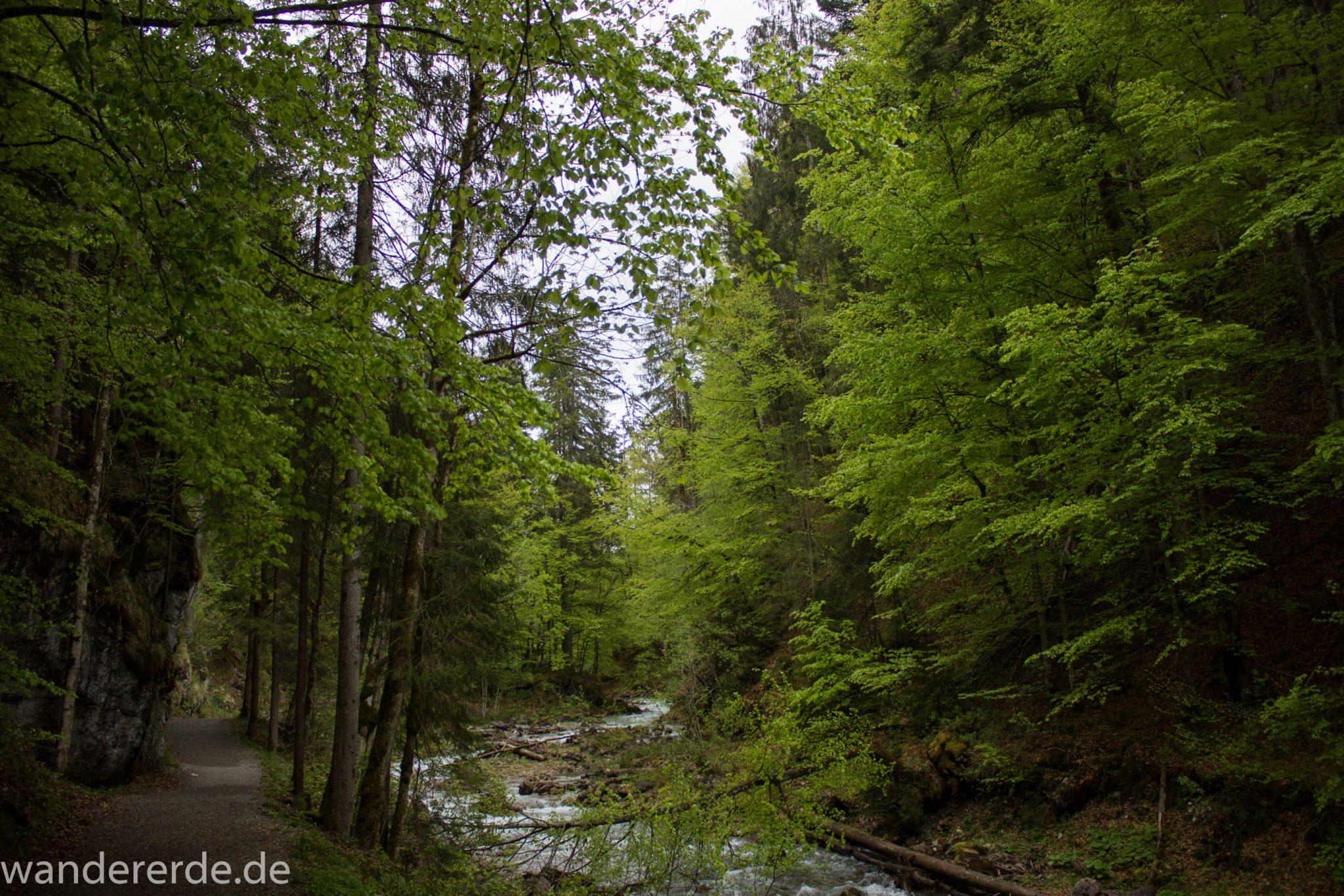 Wanderung im Oytal bei Oberstdorf im Allgäu, Bayern, schöner dichter und grüner Wald umgibt den Oybach im Oytal, sehr schöne Atmosphäre