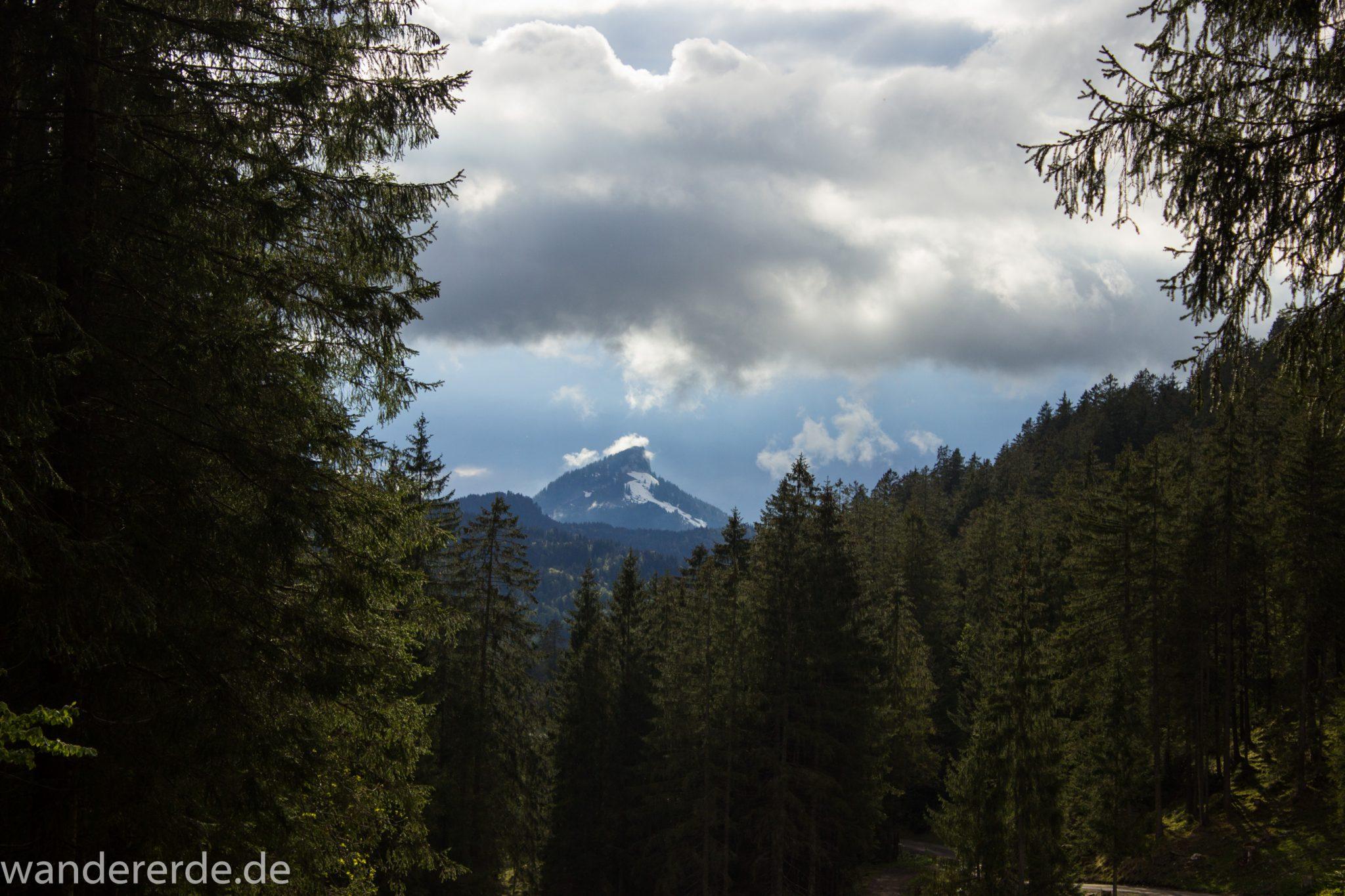 Wanderung im Oytal bei Oberstdorf im Allgäu, Bayern, schöner dichter und grüner Wald im Trettachtal Richtung Oberstdorf, sehr schöne Atmosphäre, Aussicht auf schneebedeckte Berge