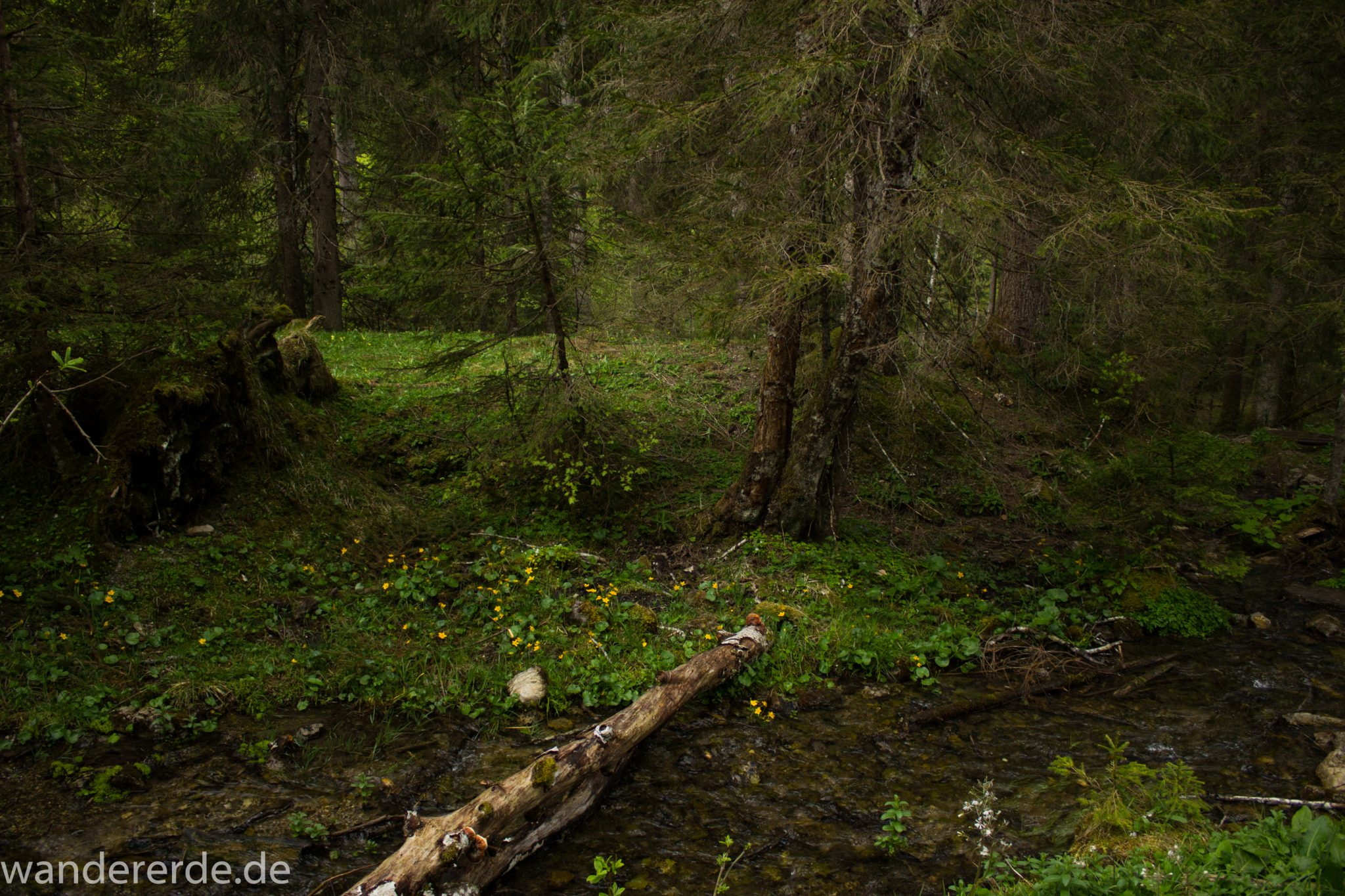 Wanderung im Oytal bei Oberstdorf im Allgäu, Bayern, schöner dichter und grüner Wald umgibt den Oybach im Oytal, Felsen säumen den Wanderweg, sehr schöne Atmosphäre, kleiner Bach an der Seite, saftige Wiesen