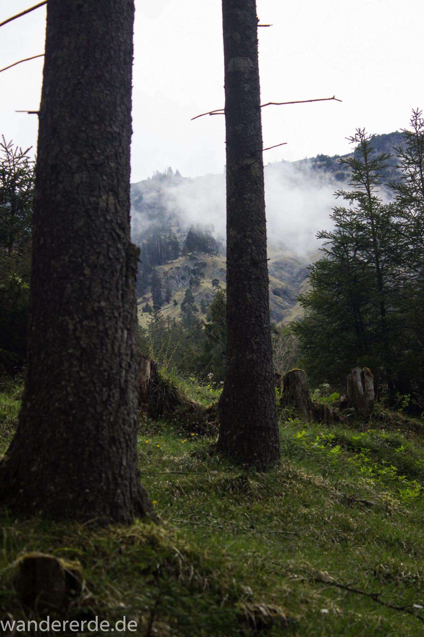 Wanderung im Oytal bei Oberstdorf im Allgäu, Bayern, schöner dichter und grüner Wald im Oytal, Aussicht auf Berge