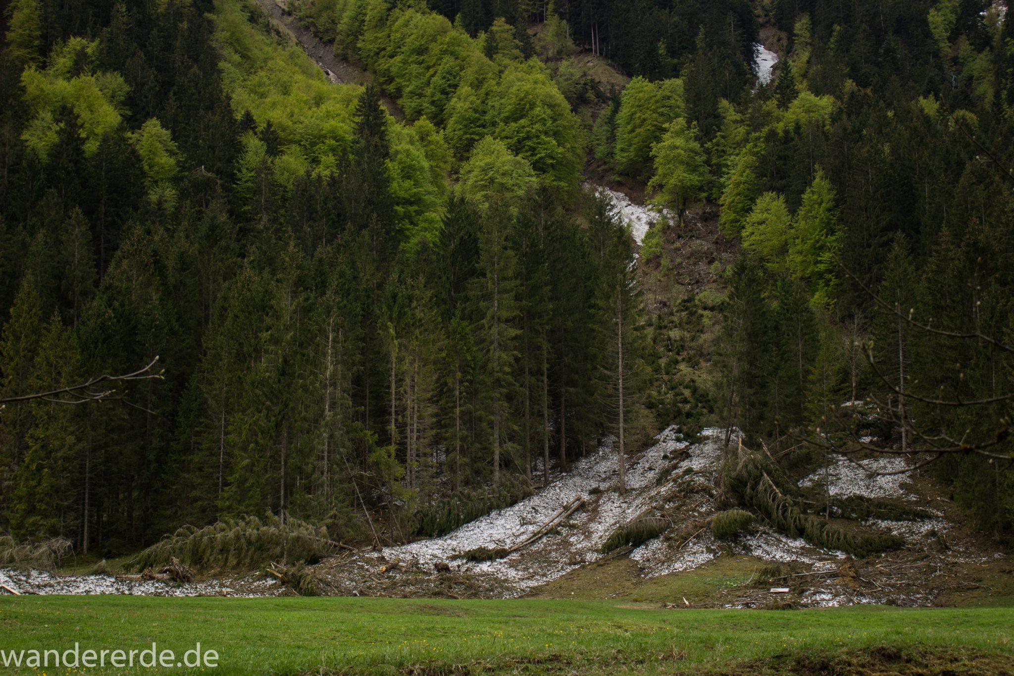 Wanderung im Oytal bei Oberstdorf im Allgäu, Bayern, schöner dichter und grüner Wald im Oytal, Wanderweg umgeben von Bergen, sehr schöne Atmosphäre, saftige Wiesen und Bäume