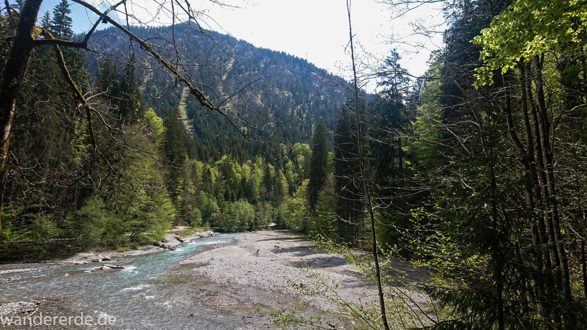 Wanderung Oberstdorf nach Gerstruben im Allgäu, Bayern, Wanderweg durch das Trettachtal, Aussicht auf Berge und Fluß Trettach, Ufer mit schönen Bäumen, sattgrüner Wald, Frühling in den Bergen