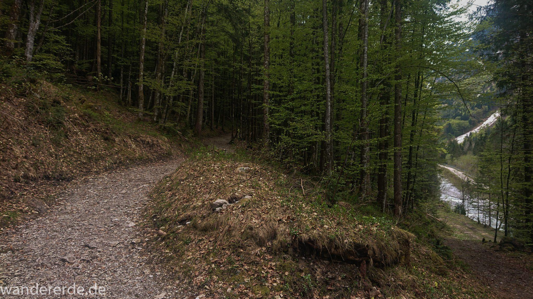 Wanderung Oberstdorf nach Gerstruben im Allgäu, Bayern, Wanderweg Rautweg führt durch schönen dichten Wald