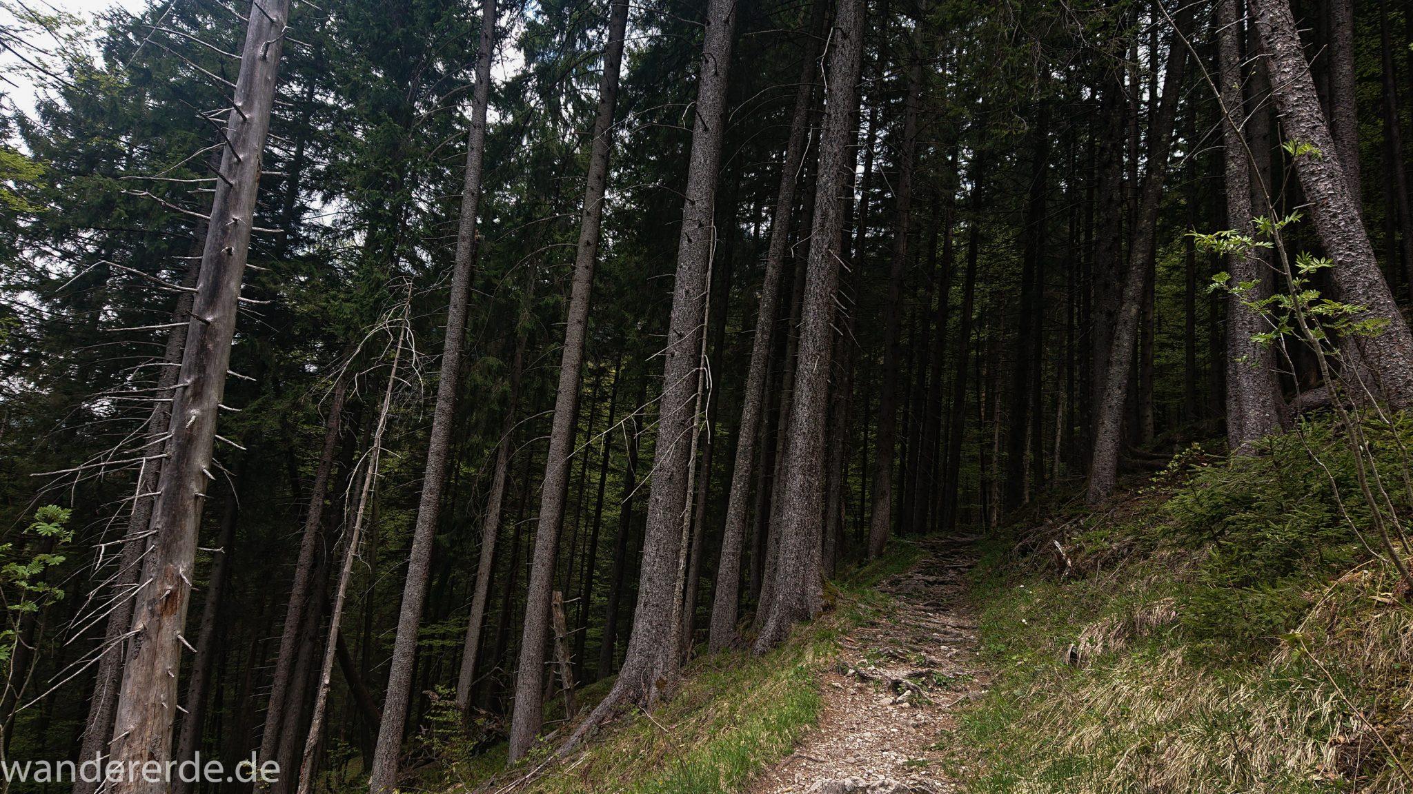 Wanderung Oberstdorf nach Gerstruben im Allgäu, Bayern, Wanderweg Rautweg führt durch schönen dichten Wald, ziemlich steil, kaum noch Menschen begegnen uns