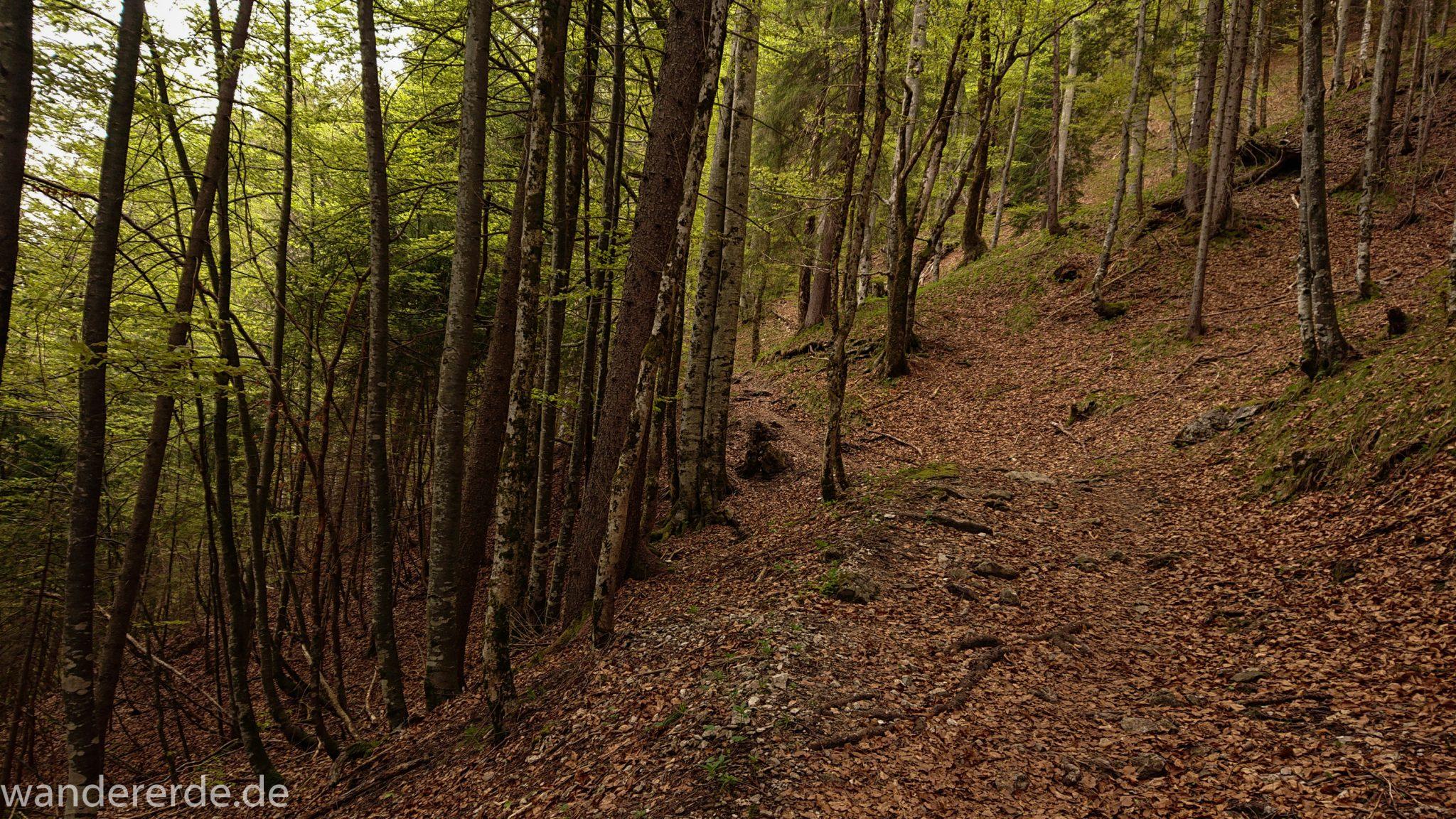 Wanderung Oberstdorf nach Gerstruben im Allgäu, Bayern, Wanderweg Rautweg führt durch schönen dichten Wald, ziemlich steiler Weg, feste Schuhe empfehlenswert, kaum noch Menschen begegnen uns, grüner Wald