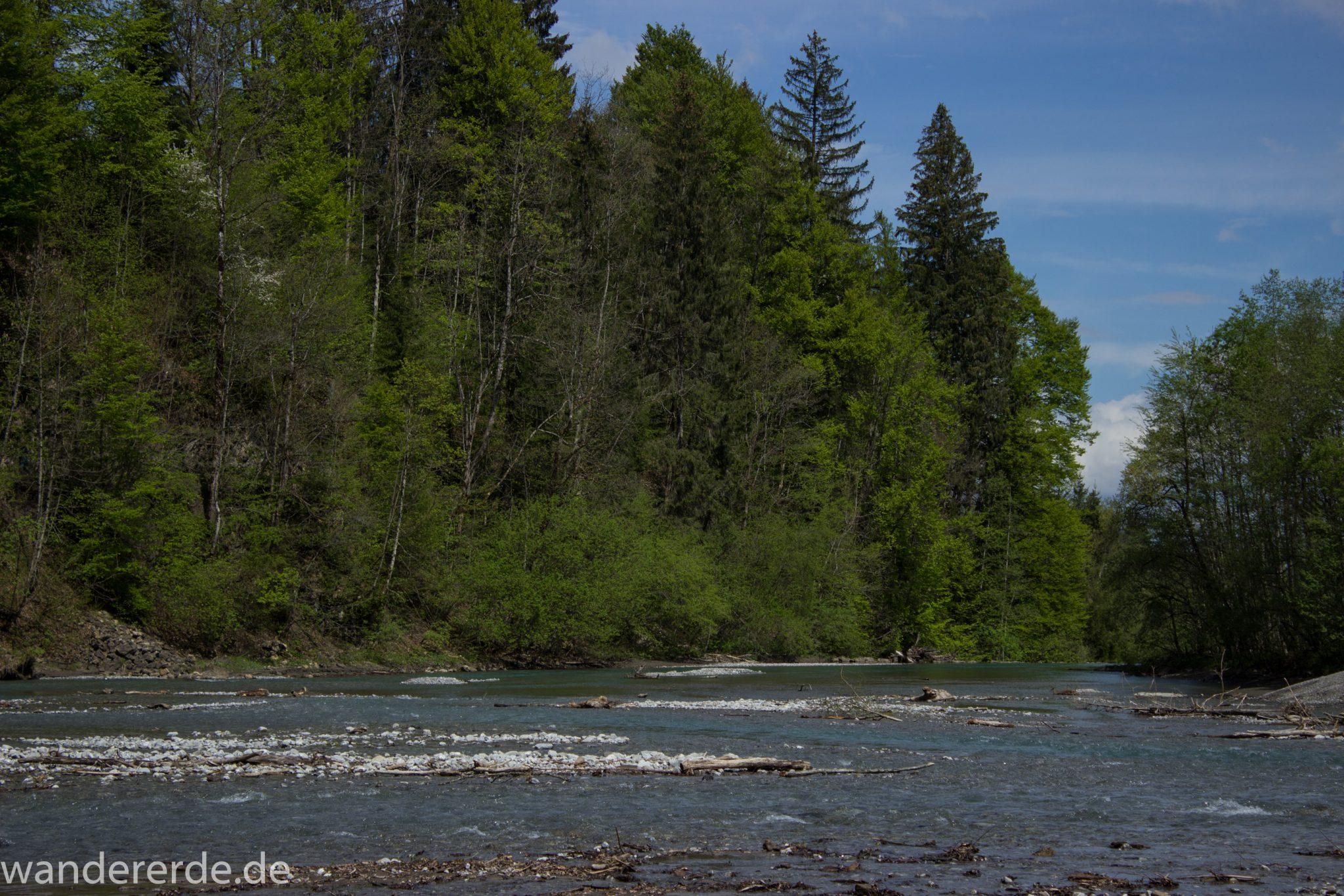 Wanderung Oberstdorf nach Gerstruben im Allgäu, Bayern, Wanderweg durch das Trettachtal, Aussicht auf Fluß Trettach, Ufer mit schönen Bäumen, sattgrüner Wald, Frühling in den Bergen