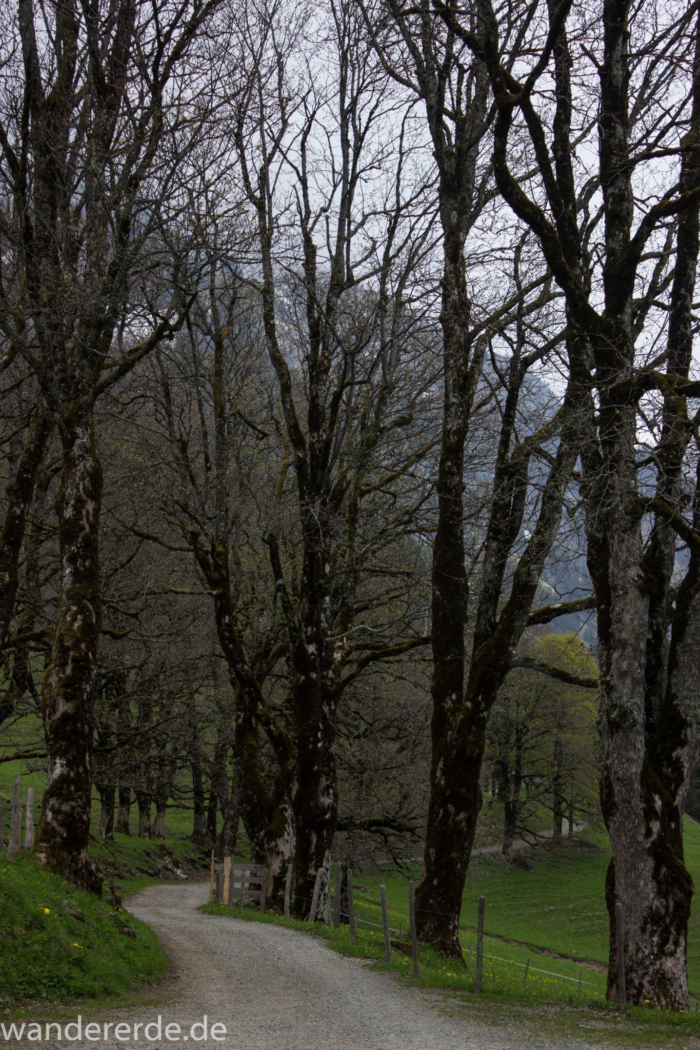 Wanderung Oberstdorf nach Gerstruben im Allgäu, Bayern, Wanderweg Rautweg führt zu schöner Ebene in den Allgäuer Alpen, kaum noch Menschen begegnen uns, Bäume blühen noch nicht in den Bergen Ende Mai, saftig grüne Wiesen, beeindruckende Aussicht auf umliegende Berge