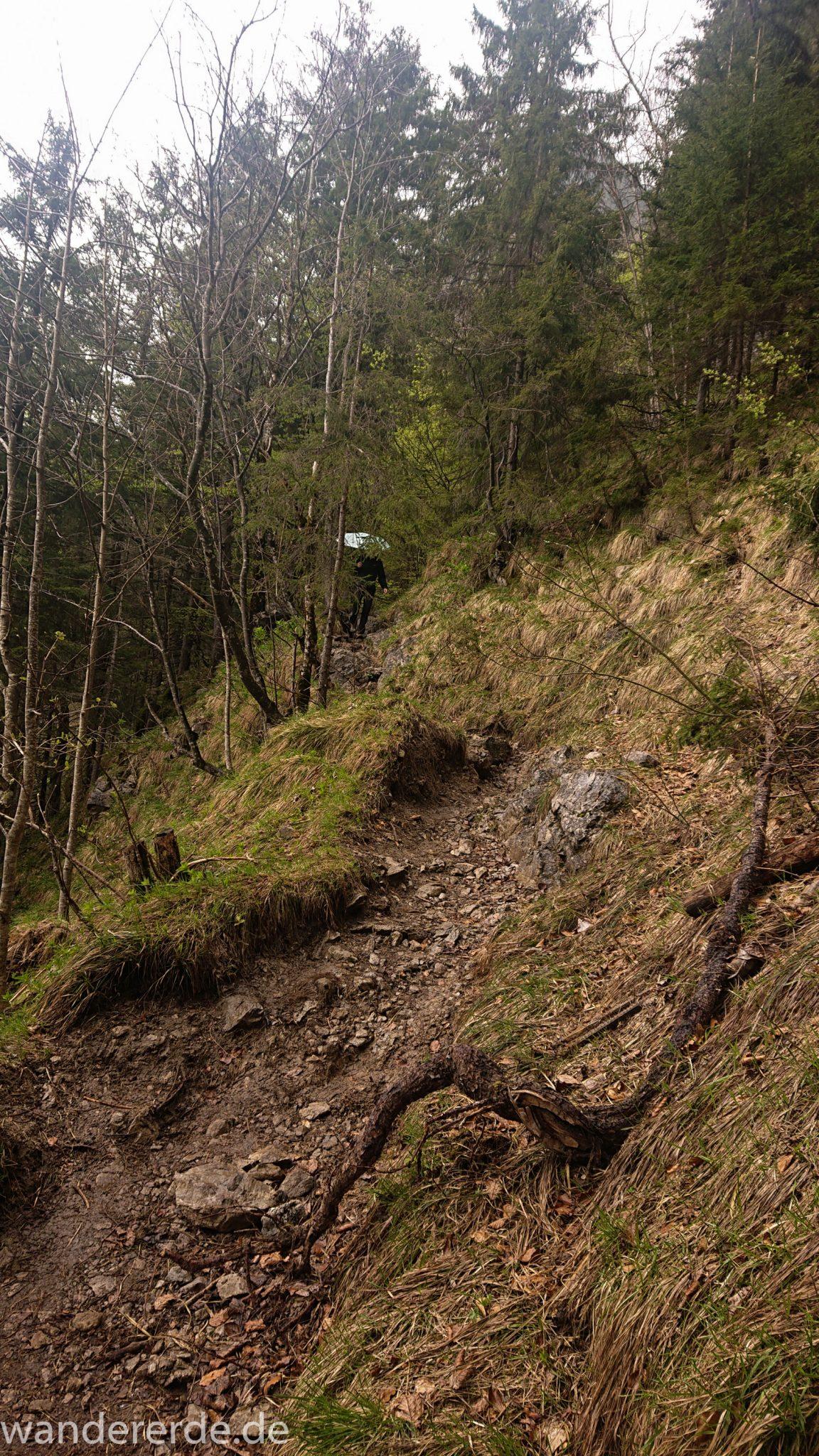 Wanderung Oberstdorf nach Gerstruben im Allgäu, Bayern, Wanderweg führt nach Bergbauerndorf Gerstruben über sehr empfehlenswerten aber steilen Weg Hölltobel wieder abwärts, grüner Wald
