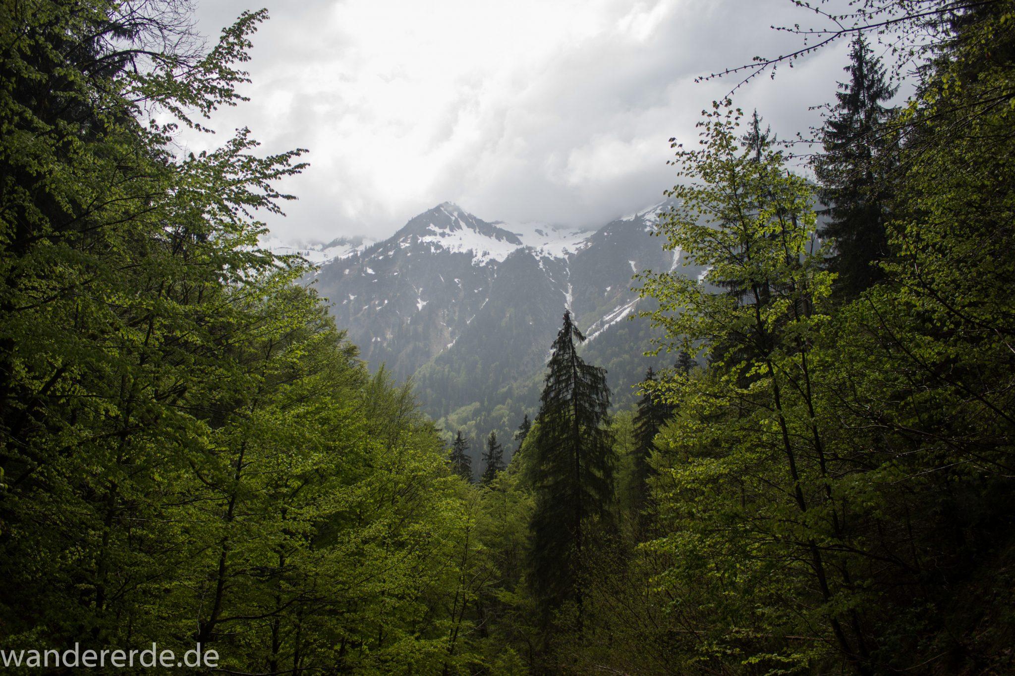 Wanderung Oberstdorf nach Gerstruben im Allgäu, Bayern, Wanderweg durch das Trettachtal, Aussicht auf schneebedeckte Berge, sattgrüne schöne Bäume und  Wiesen, Frühling in den Bergen