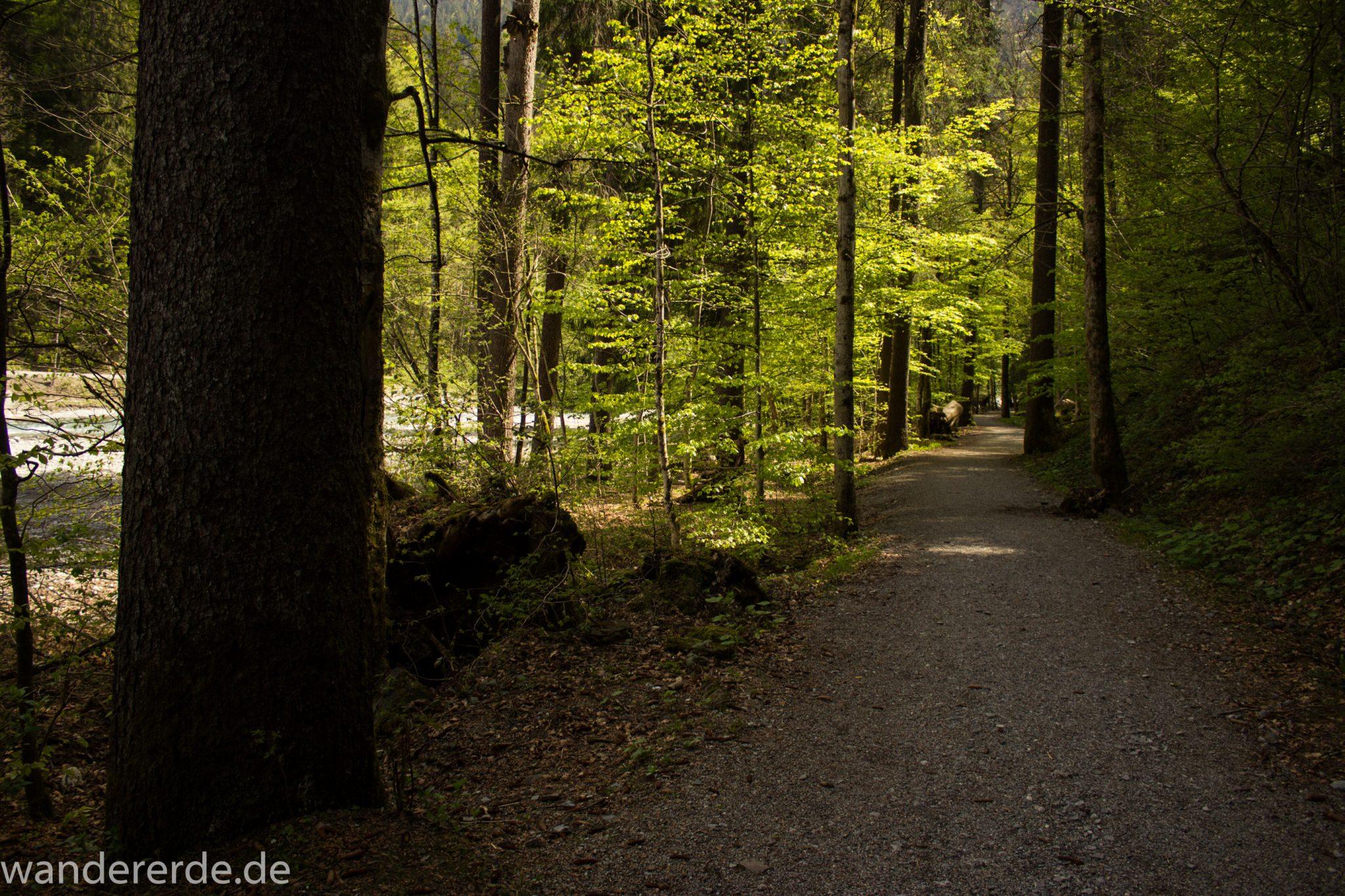 Wanderung Oberstdorf nach Gerstruben im Allgäu, Bayern, Wanderweg durch das Trettachtal, Uferweg mit schönen Bäumen, sattgrüner Wald, Frühling in den Bergen