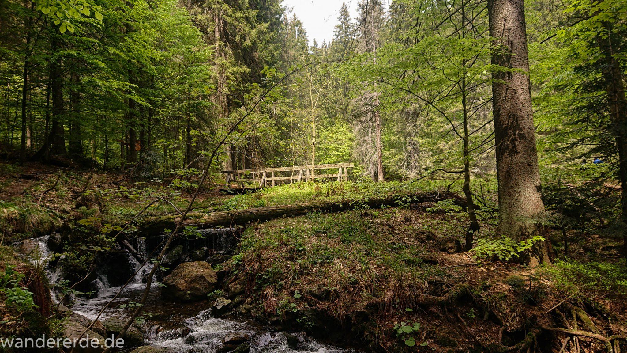 Rundwanderung zum Großen Falkenstein im Bayerischen Wald mit Start beim Zwieslerwaldhaus, auf dem Wanderweg Heidelbeere mit traumhaft schönem und dichtem Wald, toller naturbelassener und schmaler Wanderweg mit kühlendem Schatten, Frühjahr im bayerischen Wald, kleine Brücke führt über einen Bach