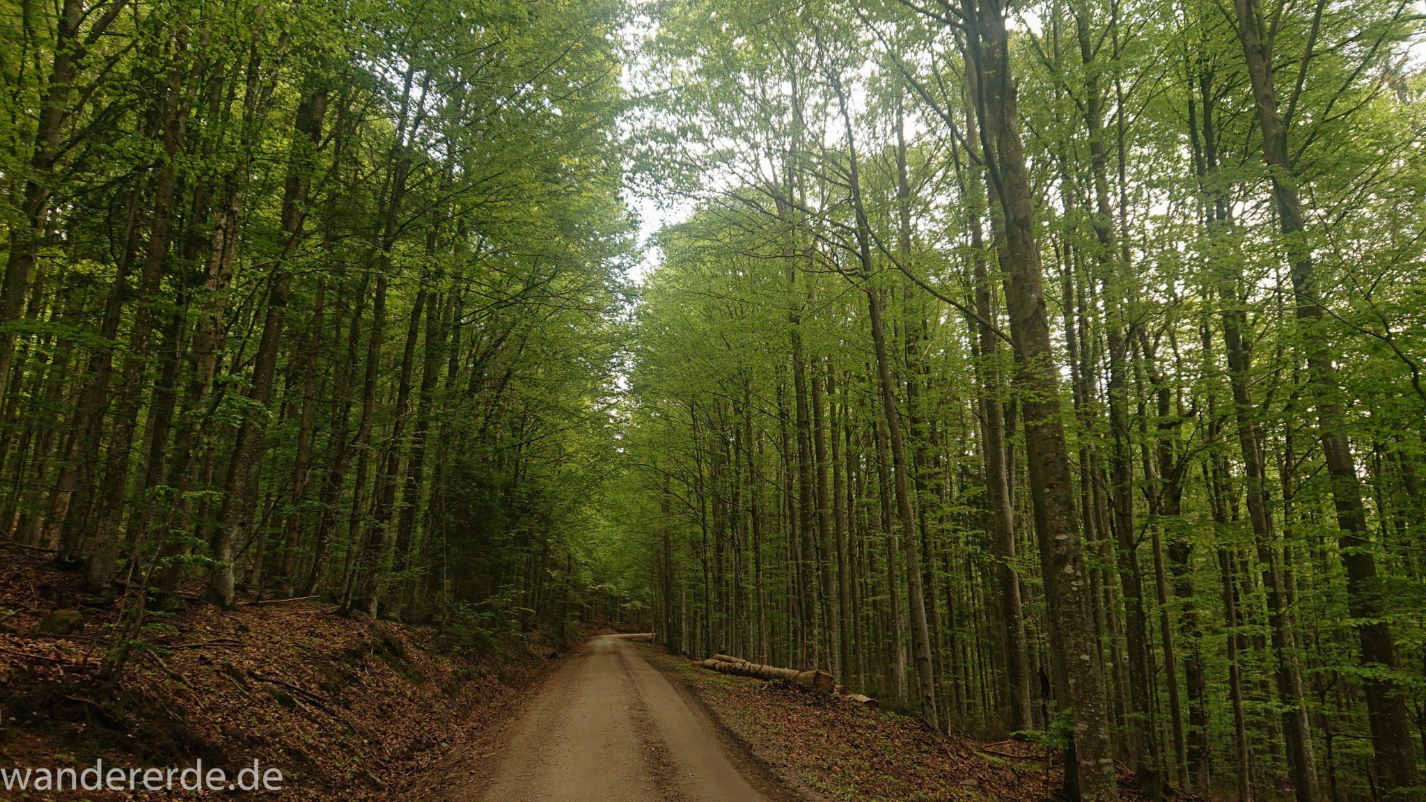 Rundwanderung zum Großen Falkenstein im Bayerischen Wald mit Start beim Zwieslerwaldhaus, breiterer Weg, der vom Zwieslerwaldhaus in den bayerischen Wald führt, schöner, dichter Laubwald
