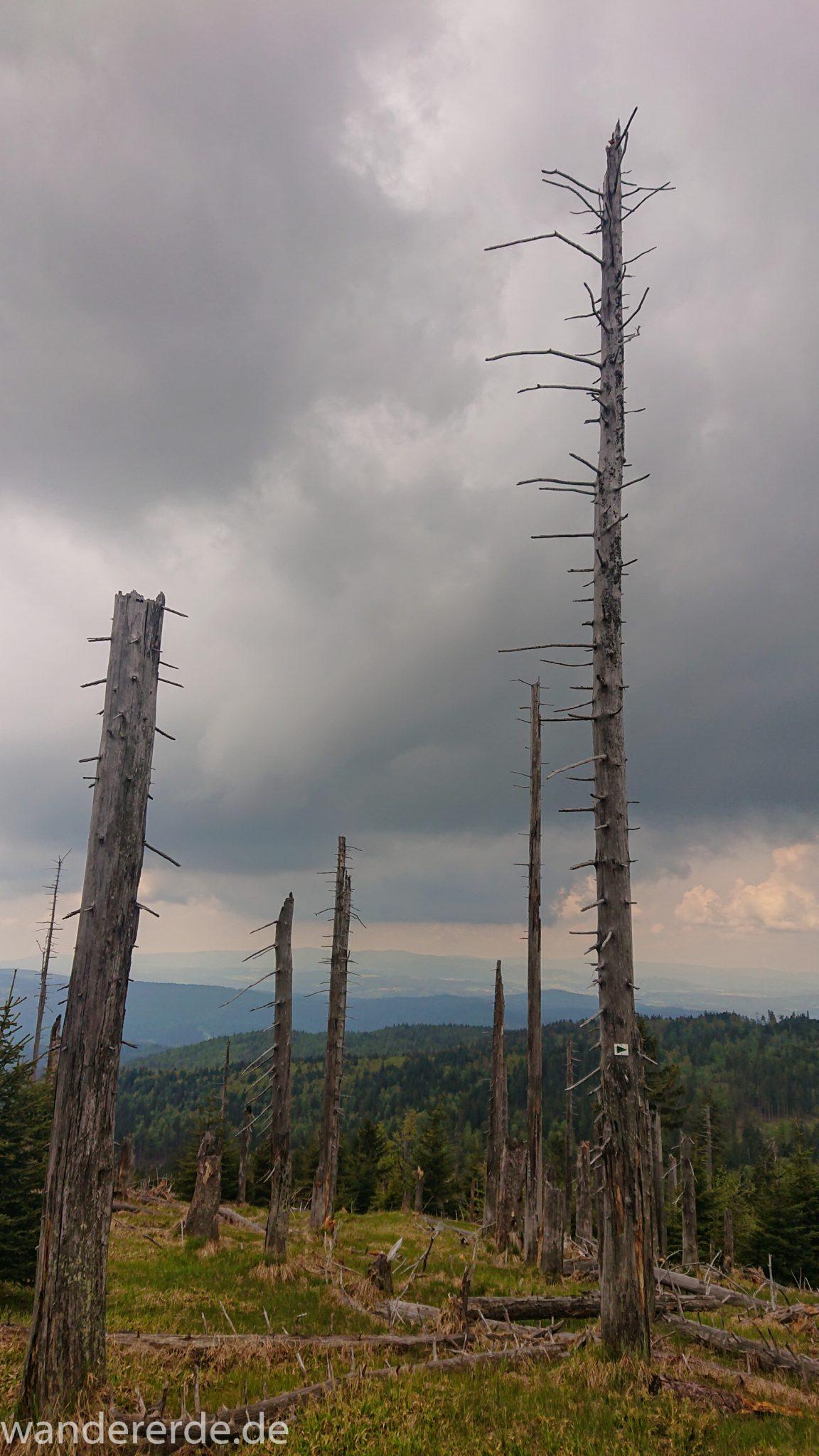 Wanderung Großer Rachel im Nationalpark Bayerischer Wald, Start Parkplatz Oberfrauenau, abwechslungsreicher Wanderweg, umgefallene Bäume werden liegen gelassen, Zerstörung einiger Waldgebiete durch den Borkenkäfer, weite Aussicht auf großes Waldgebiet