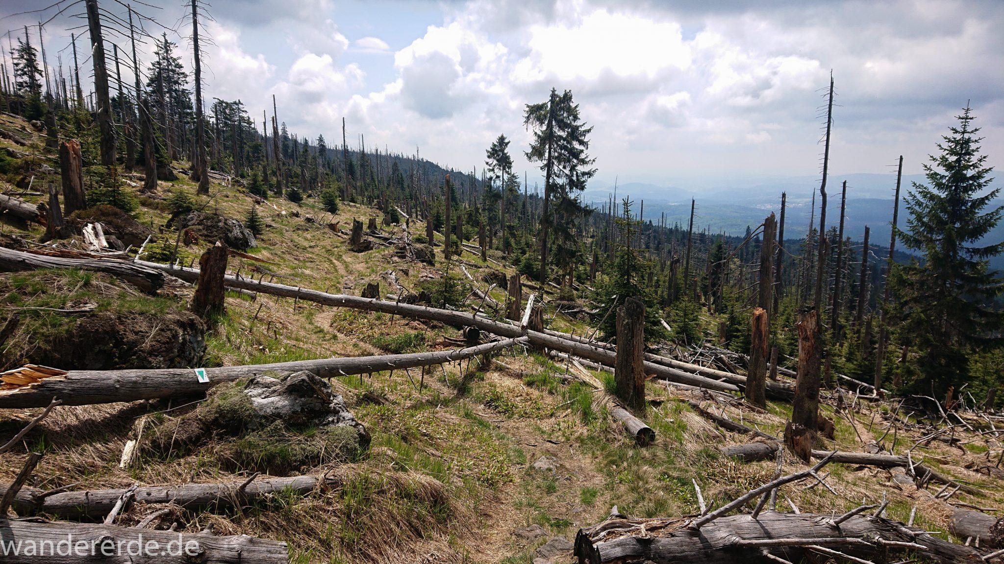 Wanderung Großer Rachel im Nationalpark Bayerischer Wald, Start Parkplatz Oberfrauenau, abwechslungsreicher Wanderweg, schmaler Pfad, umgefallene Bäume werden liegen gelassen, Zerstörung einiger Waldgebiete durch den Borkenkäfer, weite Aussicht auf großes Waldgebiet