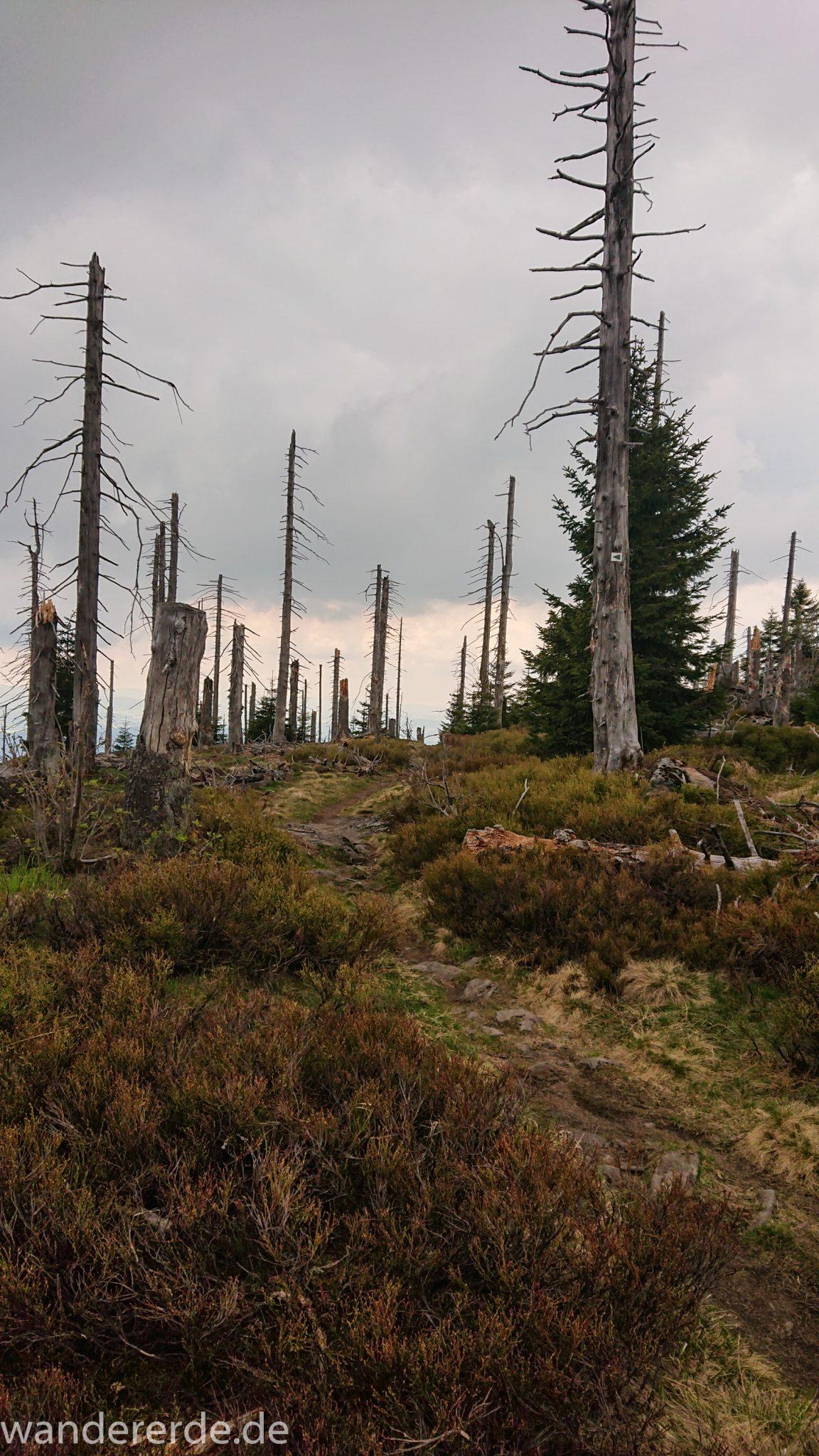 Wanderung Großer Rachel im Nationalpark Bayerischer Wald, Start Parkplatz Oberfrauenau, abwechslungsreicher Wanderweg, schmaler Pfad über Stock und Stein, umgefallene Bäume werden liegen gelassen, Zerstörung einiger Waldgebiete durch den Borkenkäfer, Wegmarkierung auf den Berg Großer Rachel mit grünem Dreieck