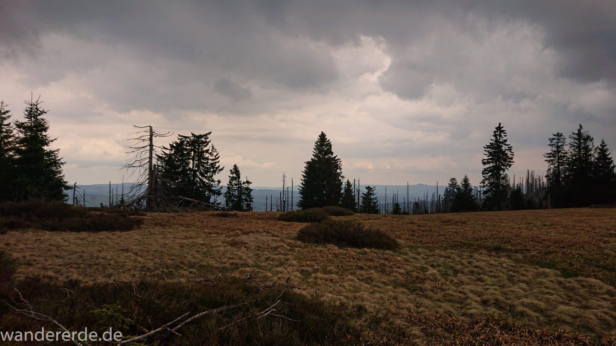 Wanderung Großer Rachel im Nationalpark Bayerischer Wald, Start Parkplatz Oberfrauenau, abwechslungsreicher Wanderweg, Heidelandschaft im Nationalpark Bayerischer Wald,  umgefallene Bäume werden liegen gelassen, Zerstörung einiger Waldgebiete durch den Borkenkäfer, weite Aussicht auf riesiges Waldgebiet