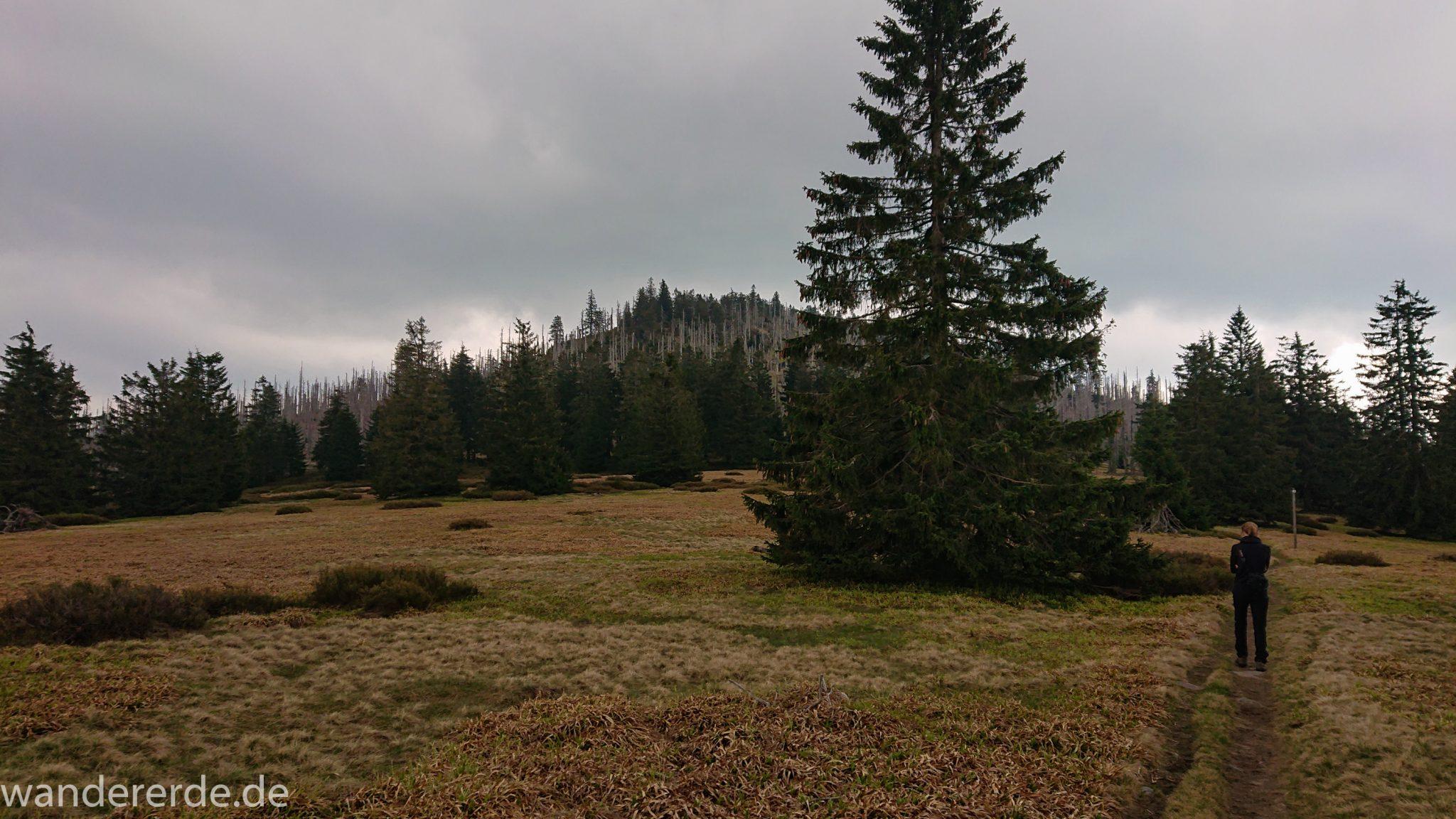 Wanderung Großer Rachel im Nationalpark Bayerischer Wald, Start Parkplatz Oberfrauenau, abwechslungsreicher Wanderweg, Wanderer auf schmalem Pfad über Stock und Stein, Zerstörung einiger Waldgebiete durch den Borkenkäfer, Wegmarkierung auf den Berg Großer Rachel mit grünem Dreieck